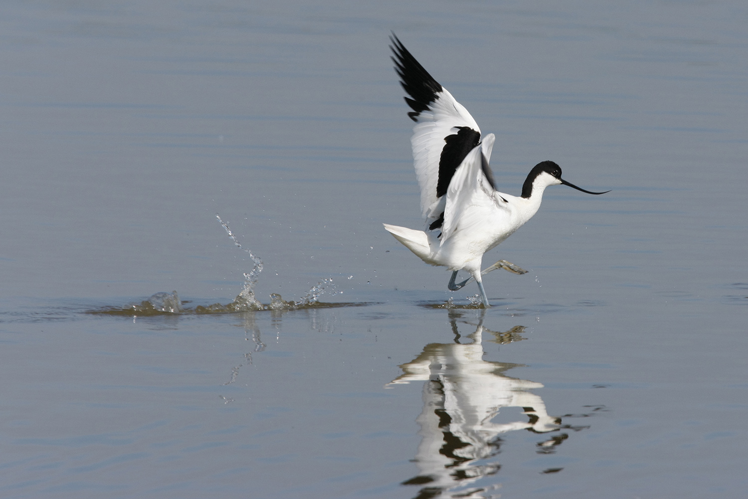 Welcome   The Lower Ure Conservation Trust   What to see this season