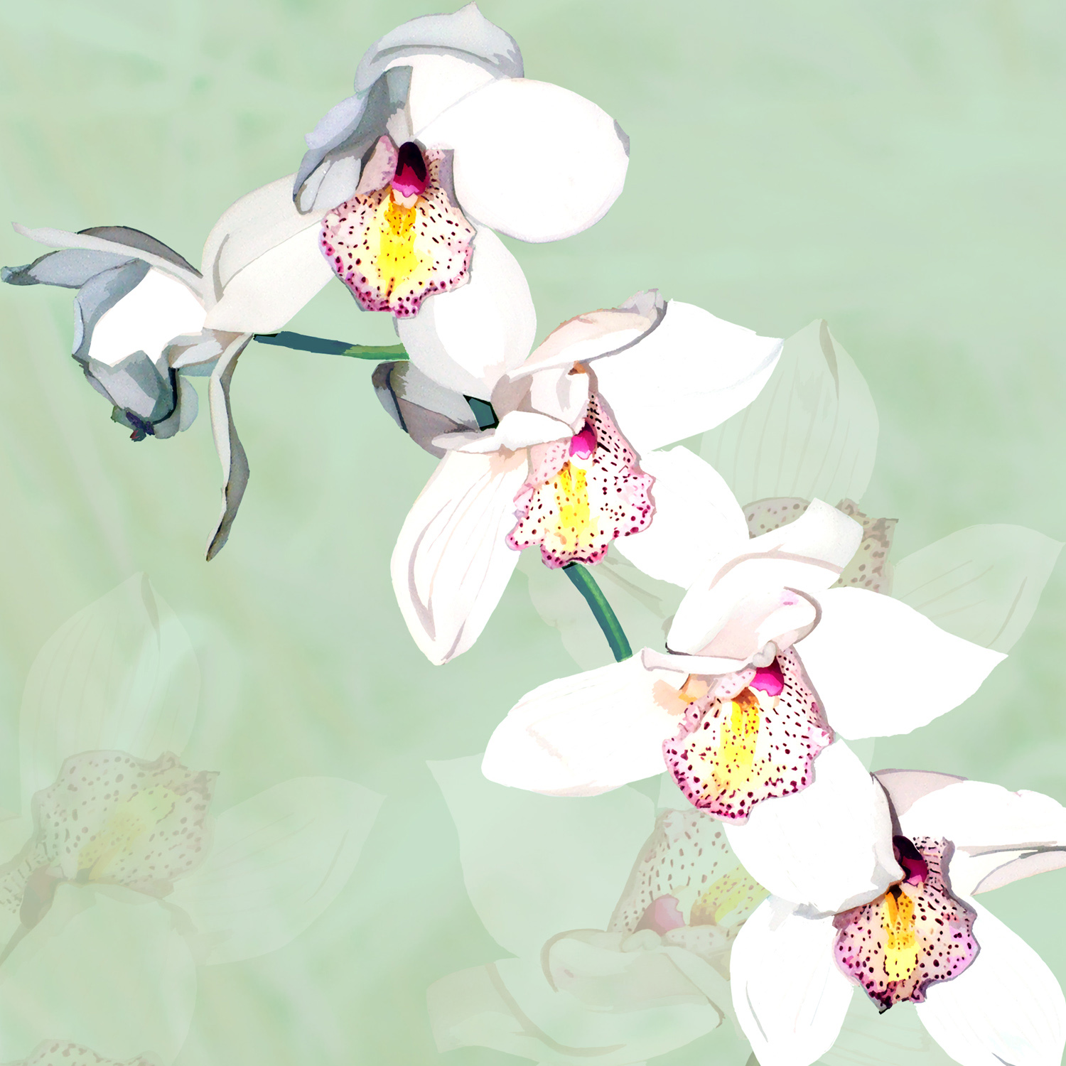 ORCHID ON GREEN – Design Ref. 1553