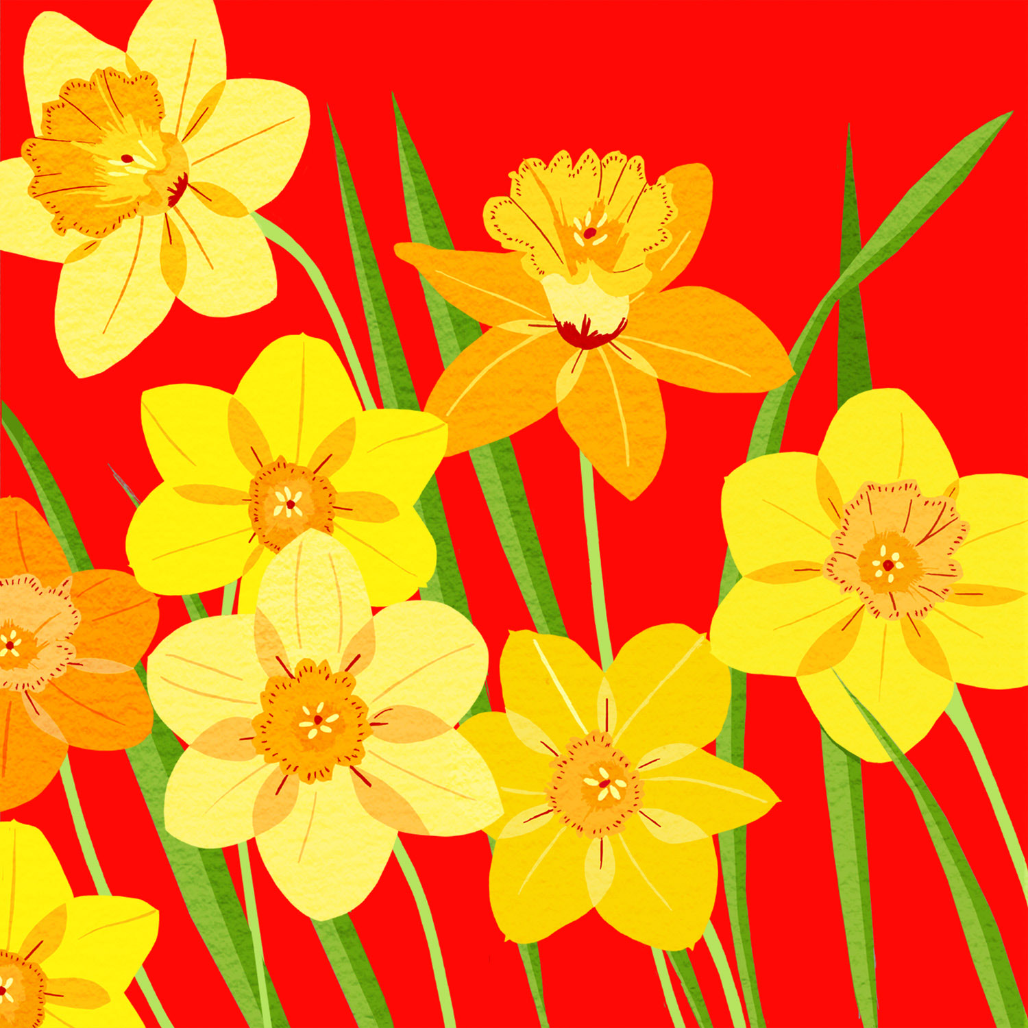 DAFFODIL ON RED – Design Ref. 2141
