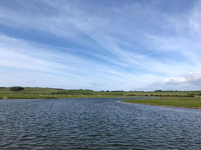 Belting dip in the meanders this morning. Watched a kestrel flap, hover and swoop while we ploughed through cool, weedy water, silty plumes beneath our feet #swimming #wildswimming #sussex #floating