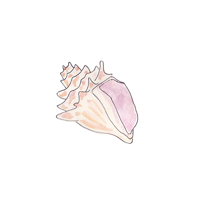 Pink Shell Watercolor