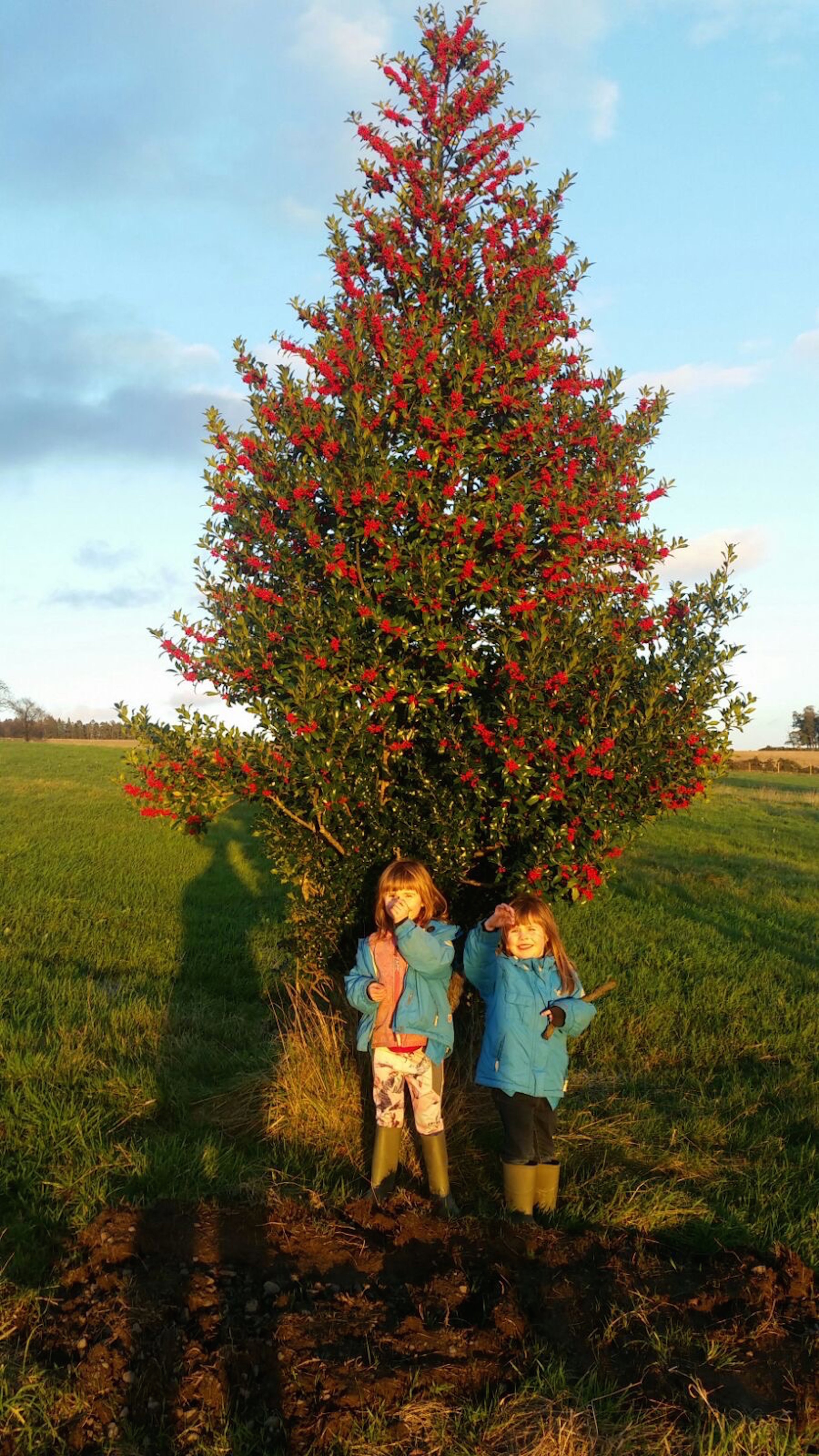Members of the Character Christmas Trees team taking some well-needed R&R under a fruiting holly.