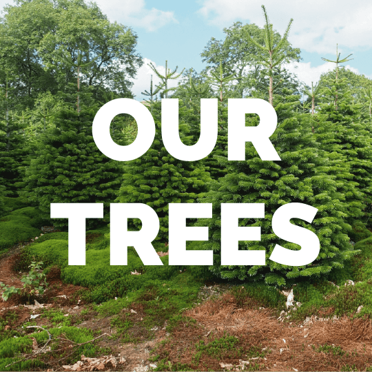CCT_our-trees.png