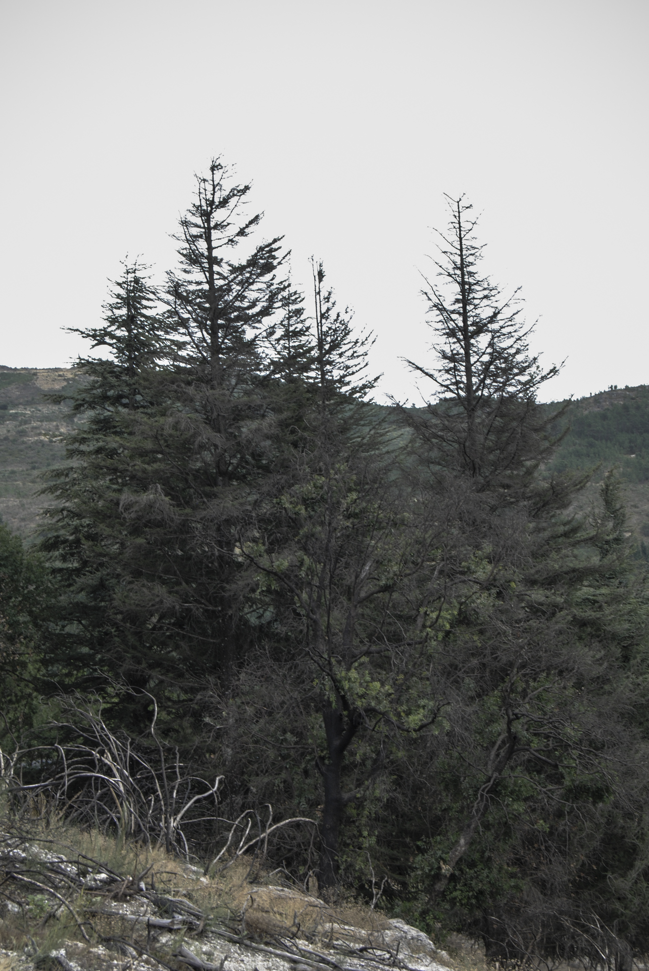 landscape_Gouveia_02.jpg