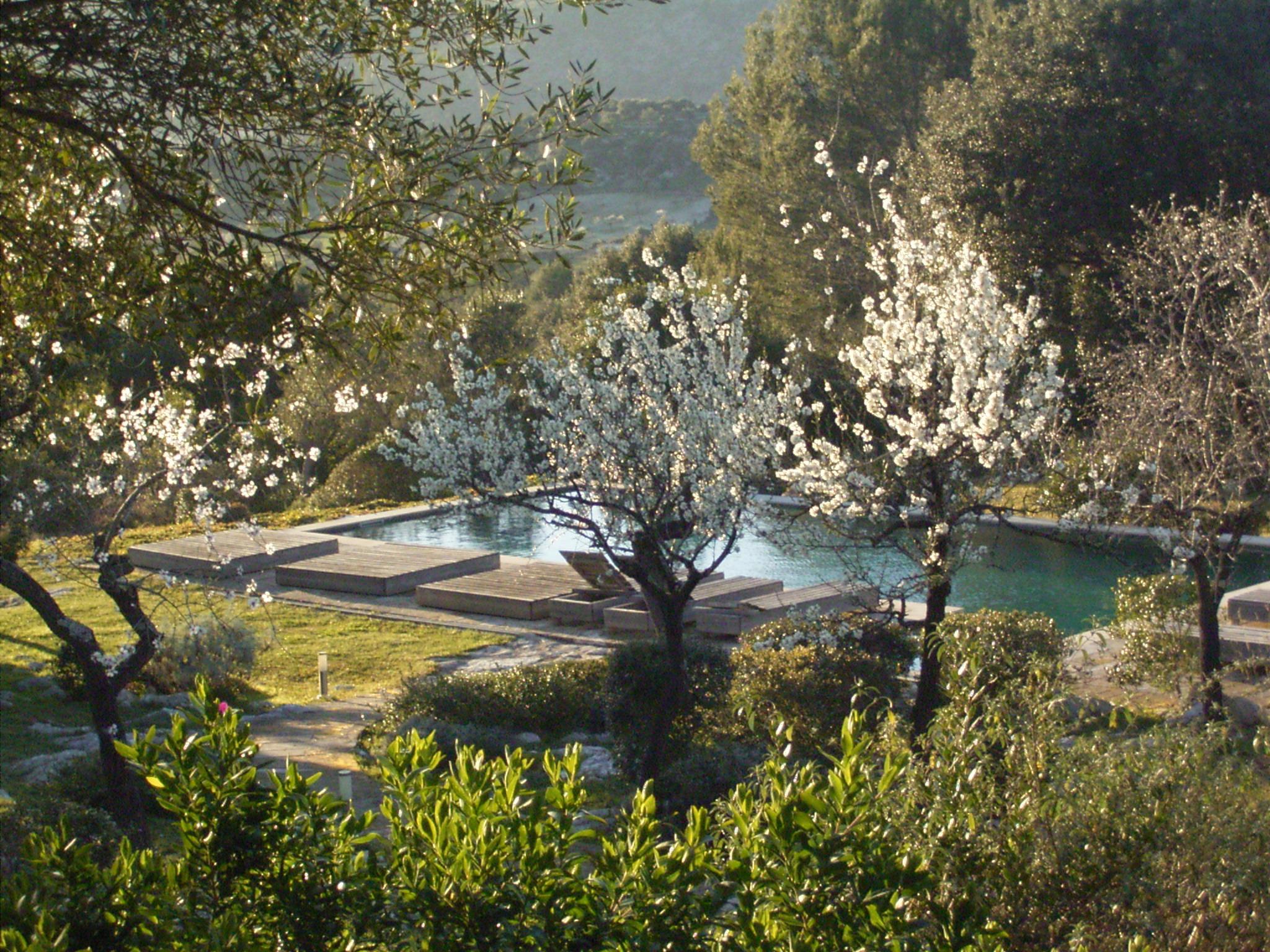 Almond Blossom at La Serranía.jpg