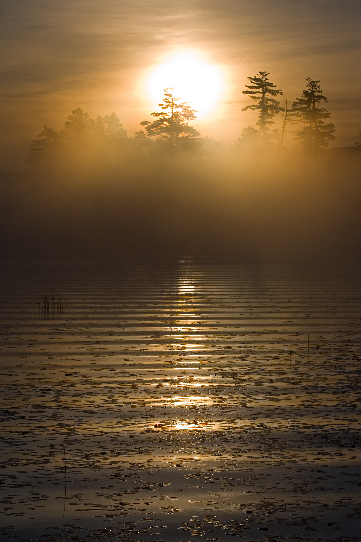 Mary Louise Ravese - Image: Mystical SunriseMary Louise is a fine art photographer whose work ranges from bold and striking to mellow and contemplative. Favorite subjects are landscapes, close-ups, architectural details and abstracts. Inspired by various visual arts, she creates
