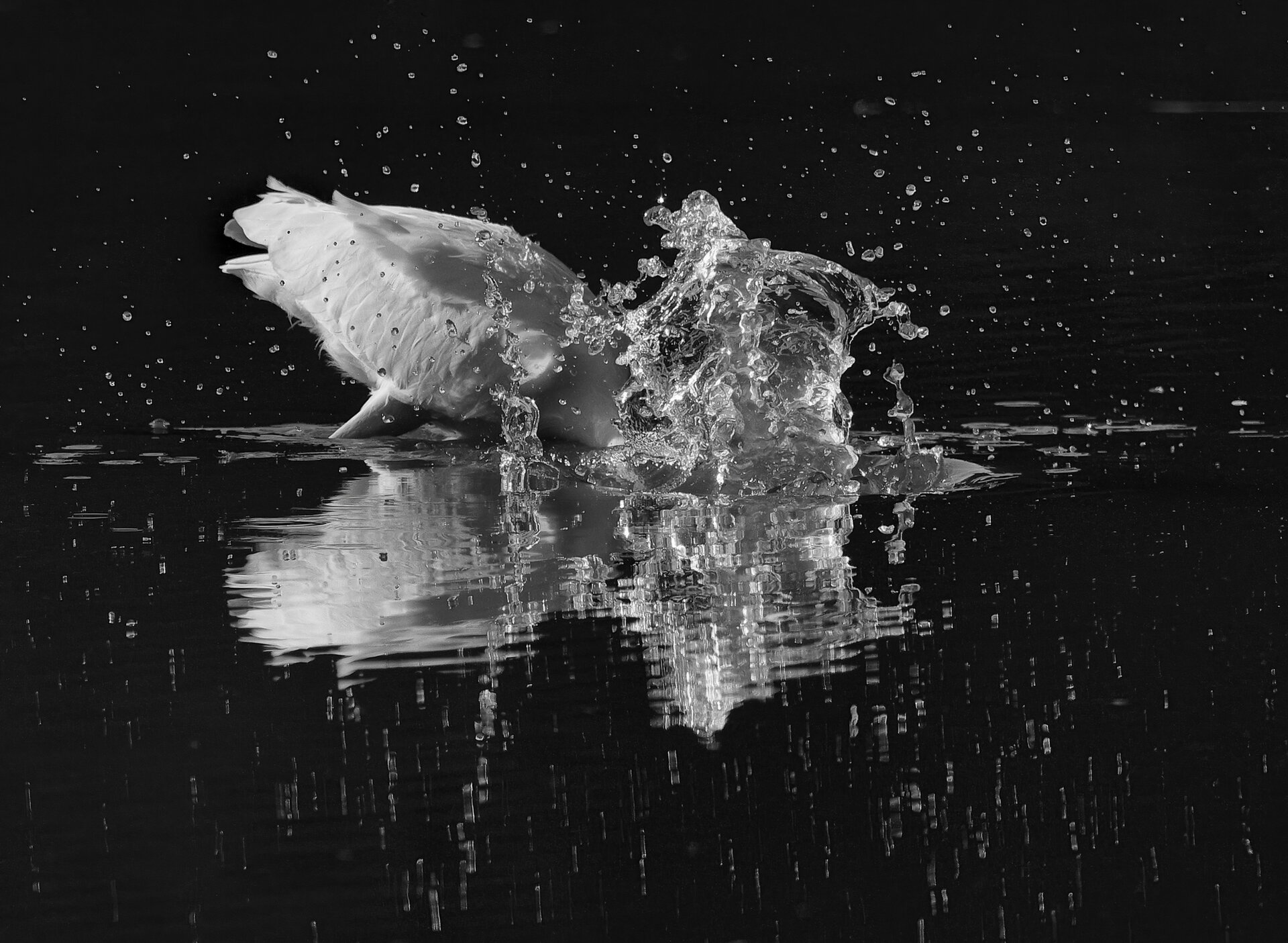 Alan_Clark_Celestial_Splash.jpg