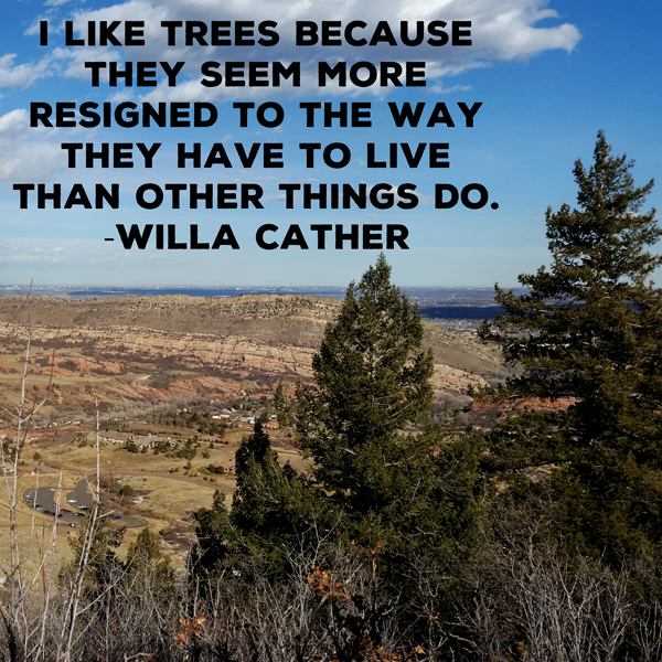Campfire Travelers - nature inspiration - tree quote by Willa Cather