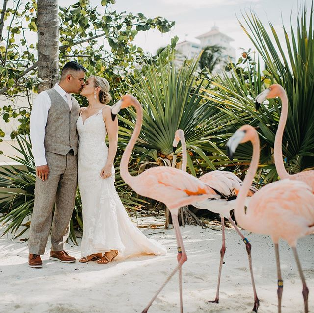 A flamingo parade is the best kind of parade especially when I'm photographing a wedding . Thank you @bahamarresorts for having these beauties!! #flamingo #flamingosatweddings #bahamarweddings #bahamas #bahamaswedding @noranarky