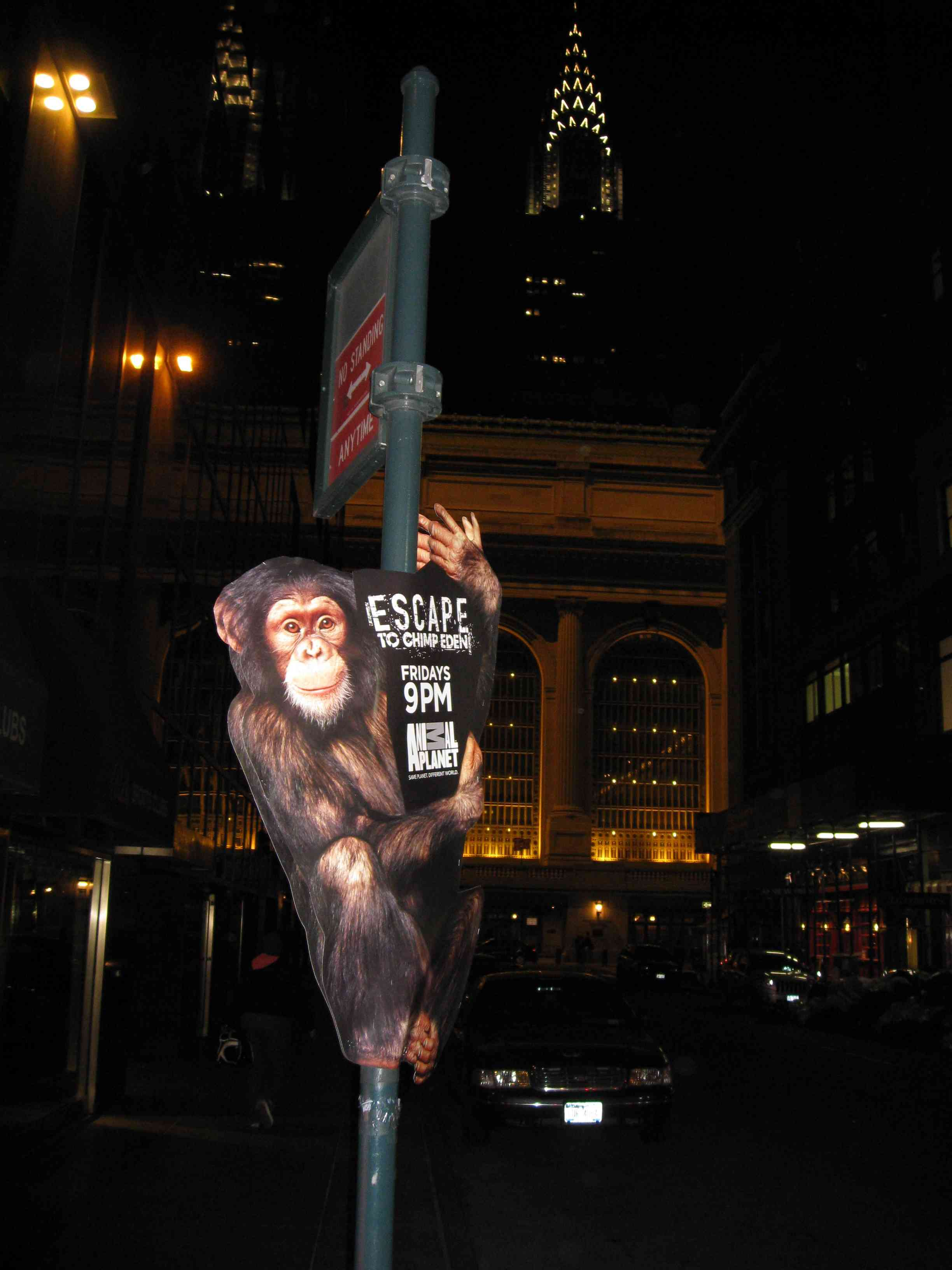 pole signs, pole banners, street team posters