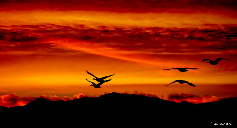Geese at Sunset.jpg