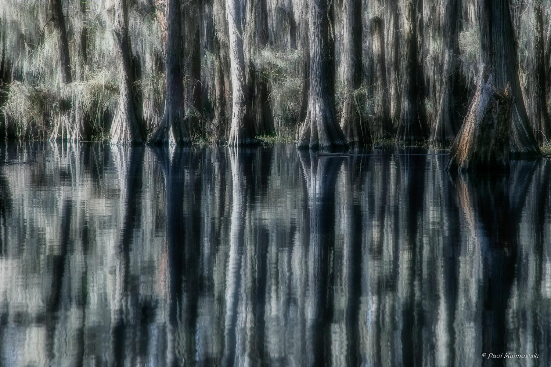 caddo lake-2