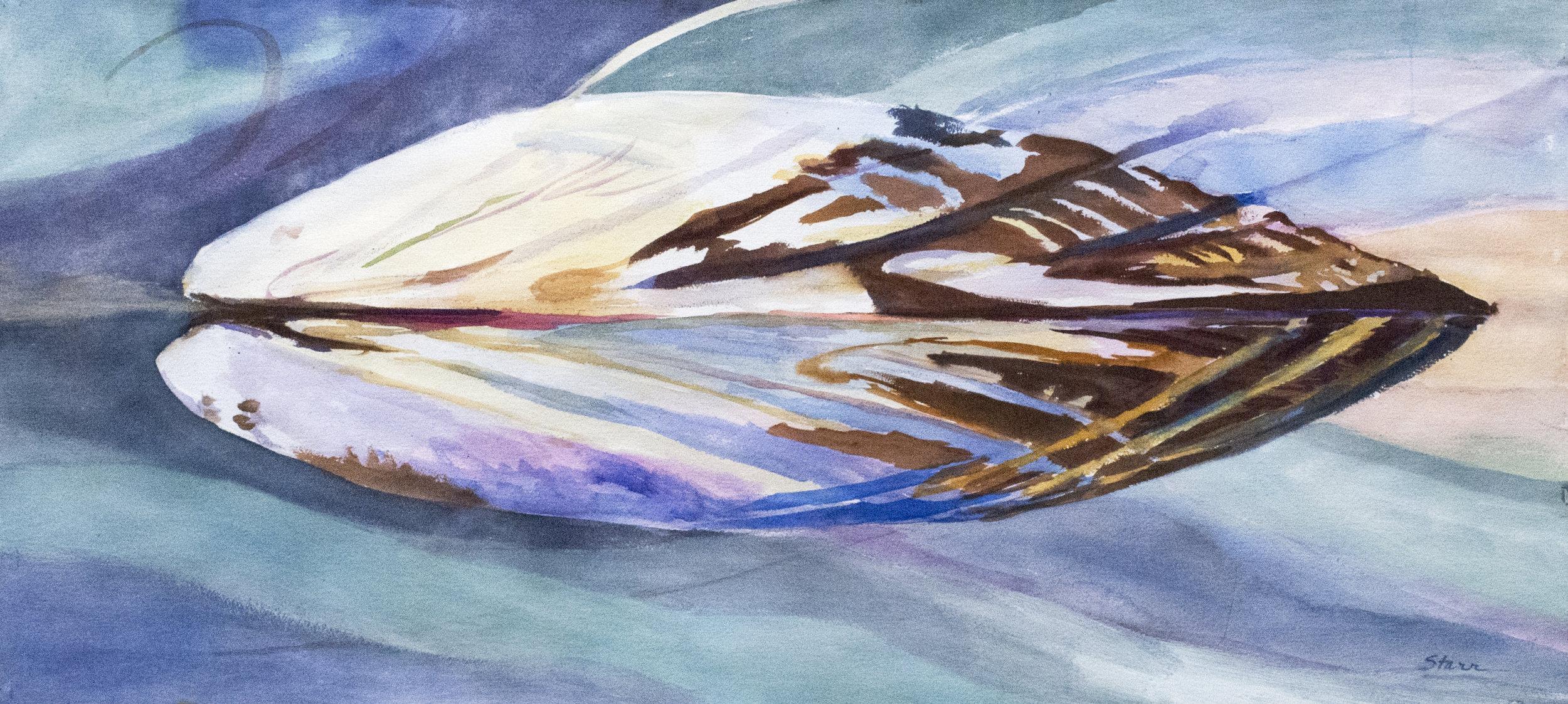 Spring Mussel