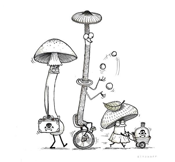 Poisonous Mushrooms. Amanita Ocreata. Conocybe Filaris. Amanita Phalloides.