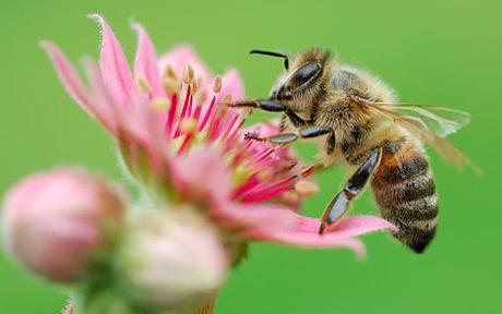 google-bee.jpg
