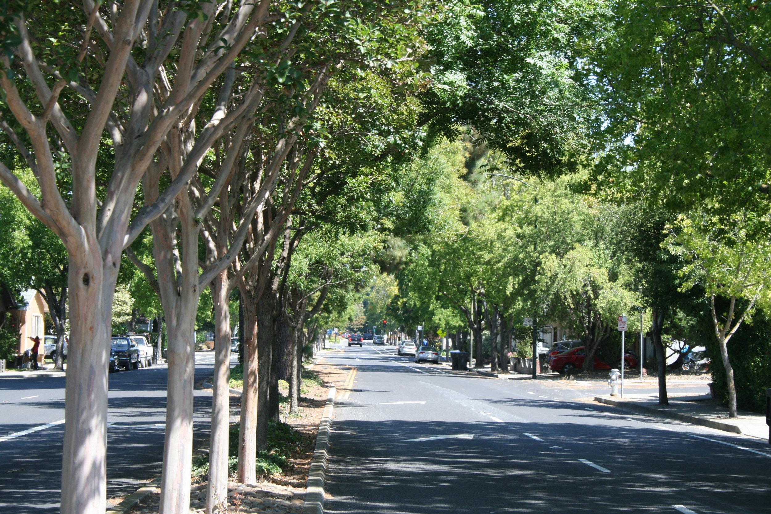 MV trees.JPG