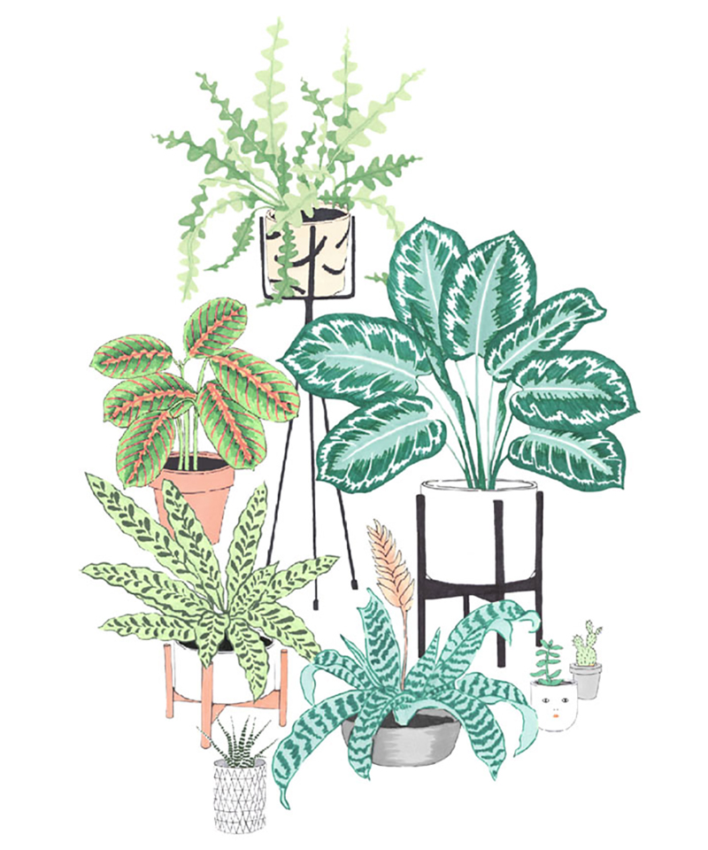 House-plant-pattern-products-Cards.jpg
