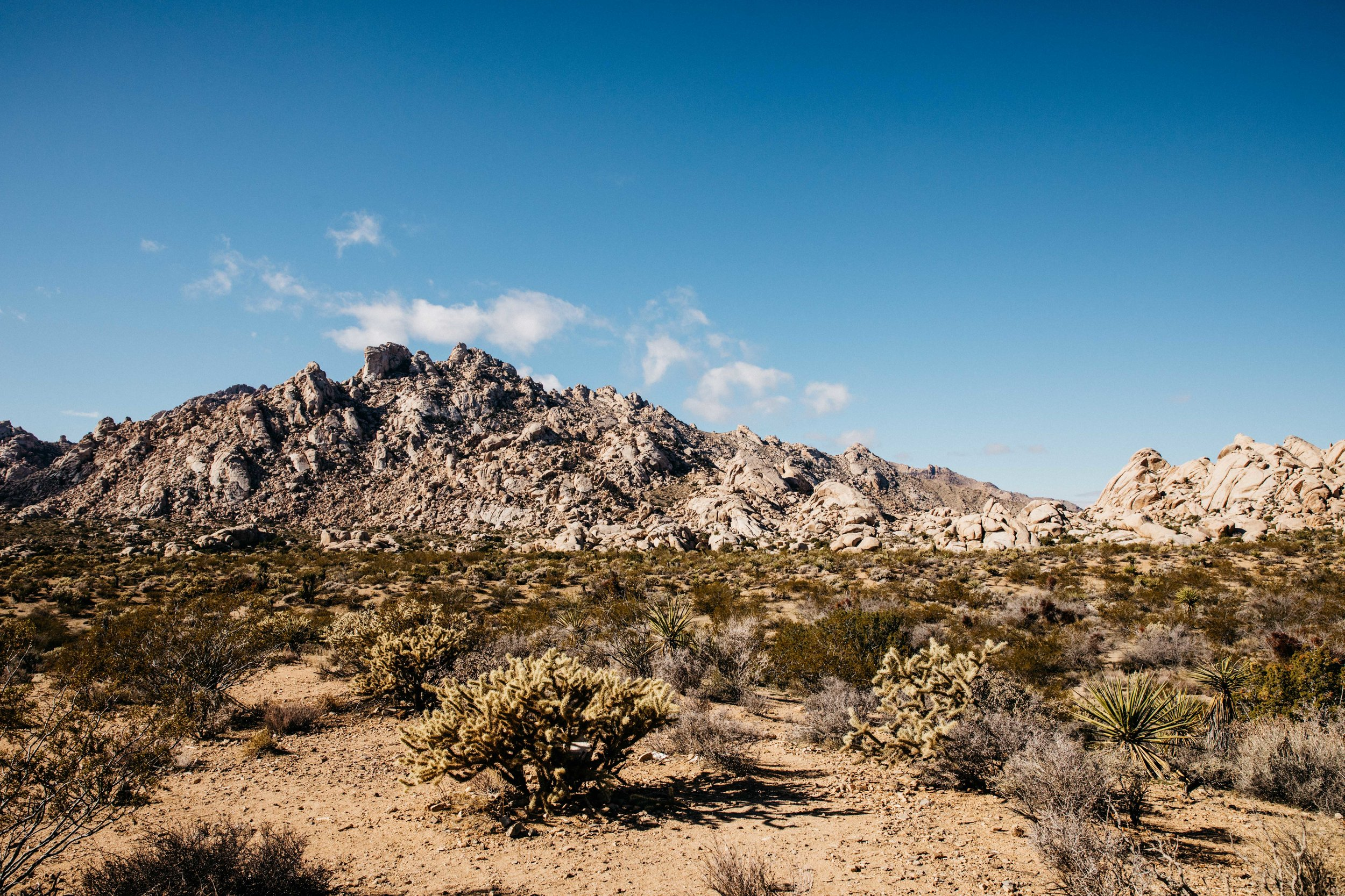 Things to do in the Mojave National Preserve