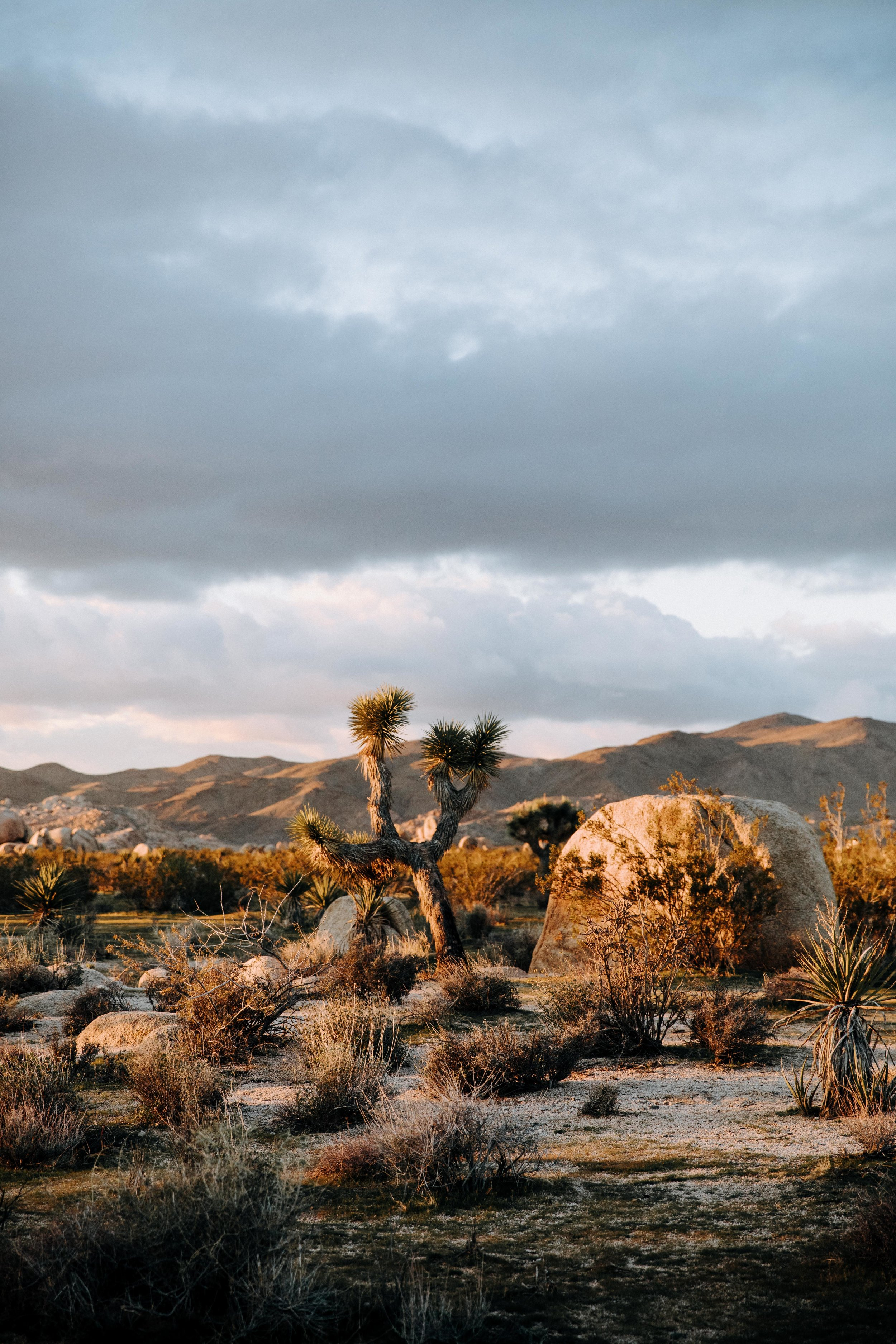 Things to do in Joshua Tree in the winter