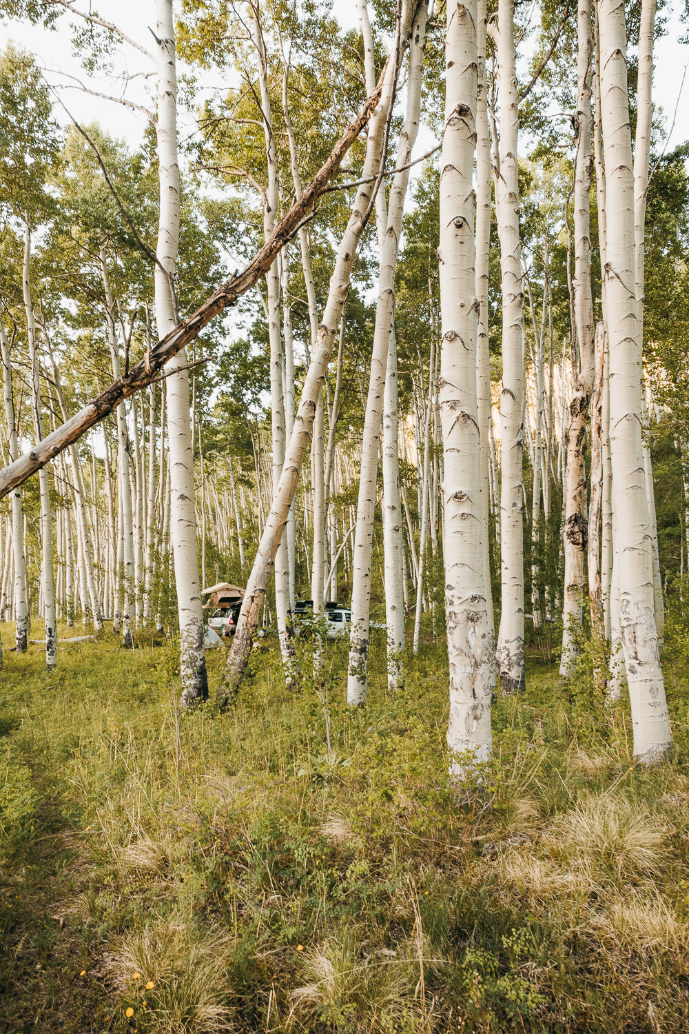 The Ultimate 10 Day Road Trip Through Colorado | Telluride Camping