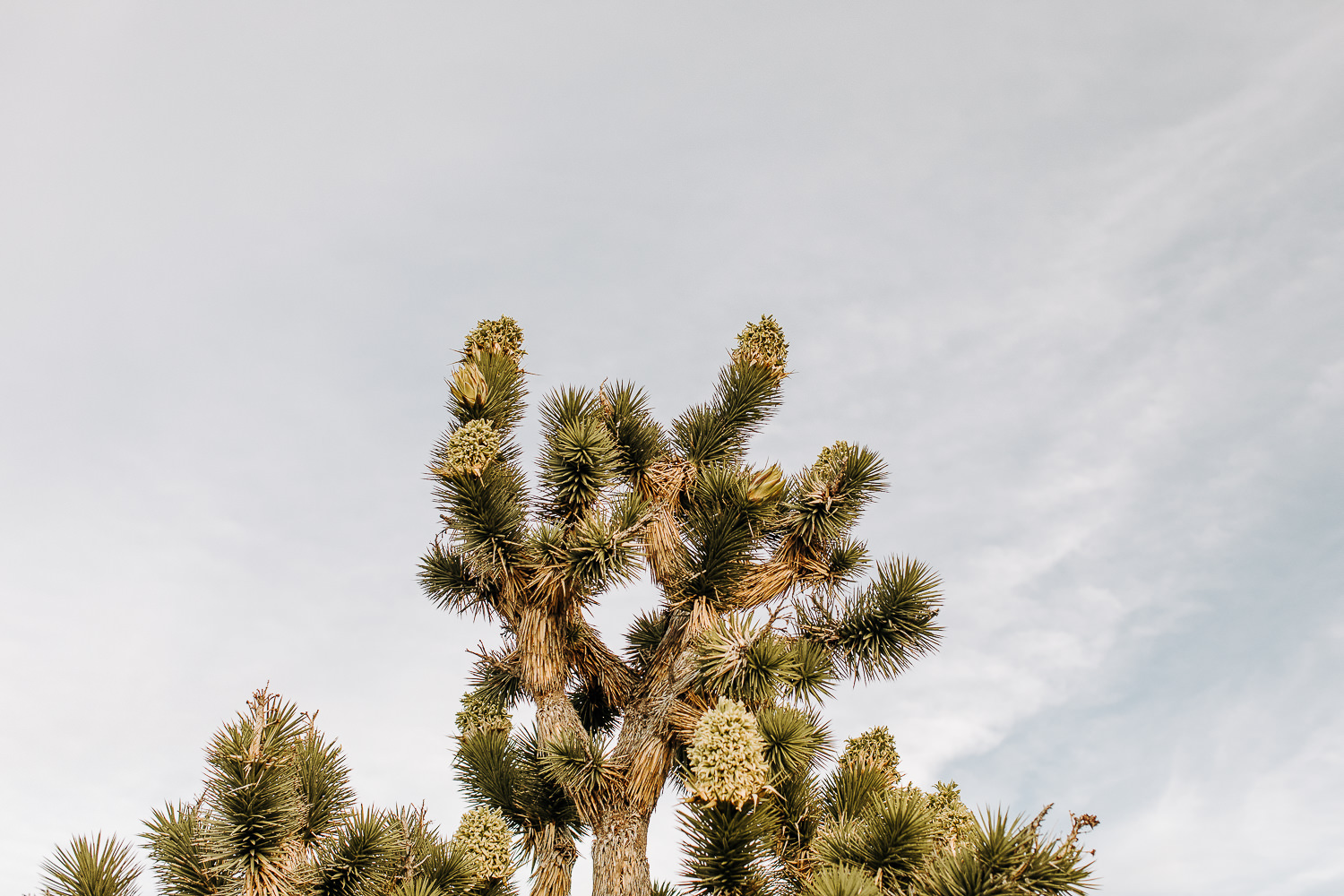 What to do if you have 48 hours in Joshua Tree, California | Mojave National Preserve