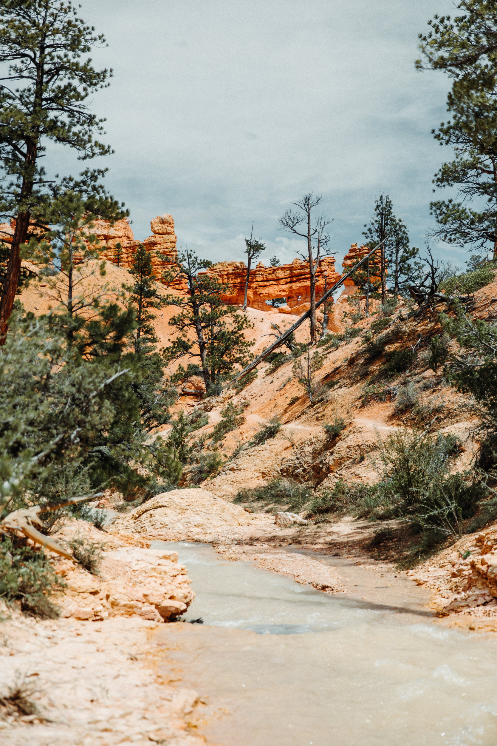 The 3 best hikes in Bryce Canyon National park - Mossy Cave trail