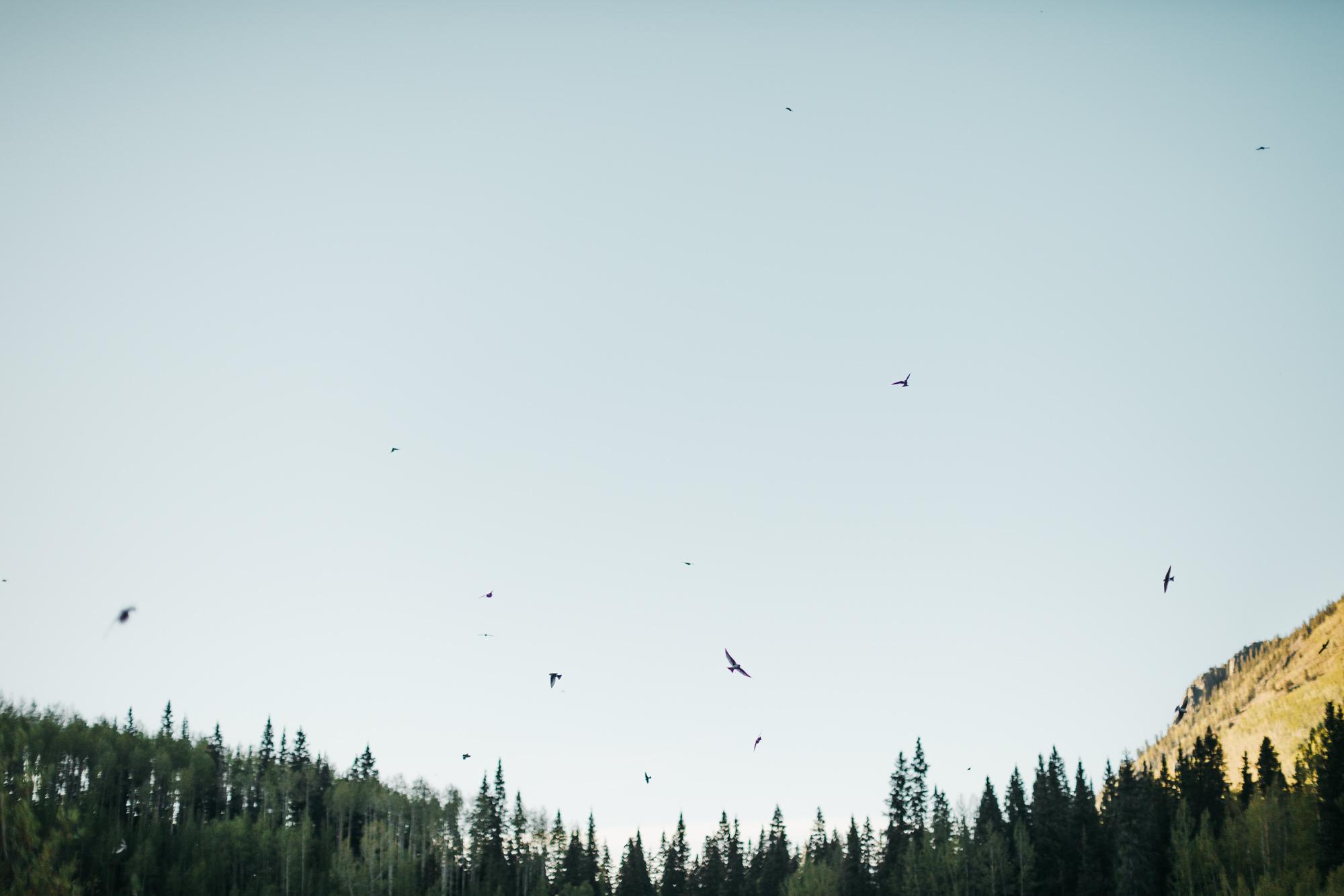 wildlife in Telluride colorado