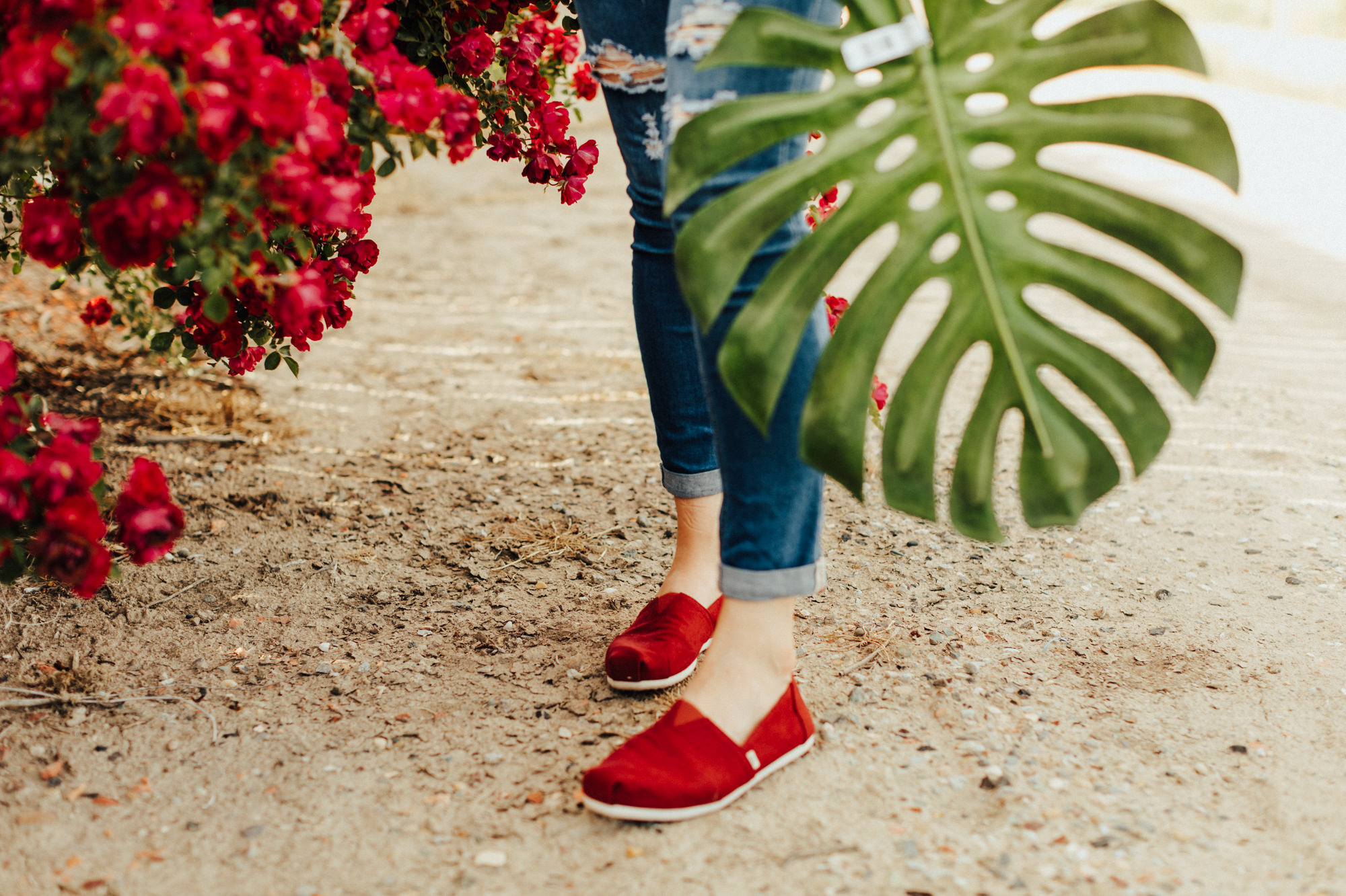 Photo of red Toms shoes with a green monstera leaf