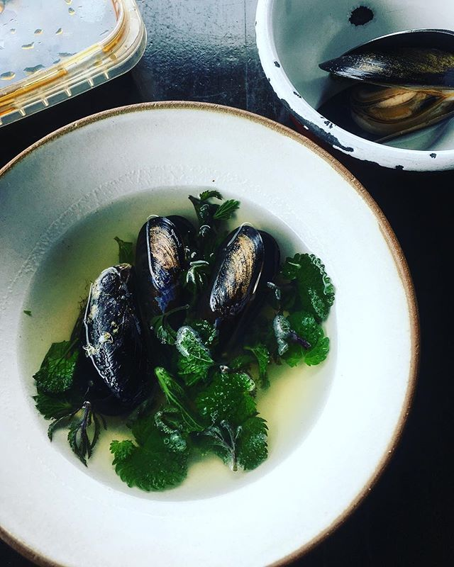Spring shoots and mussels #actinoliterestaurant #knowyourshoots #nourishing #testing