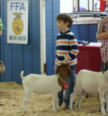 My youngest son raised his own wether to show.