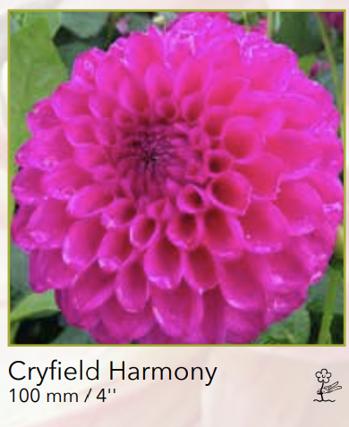 Cryfield Harmony.png
