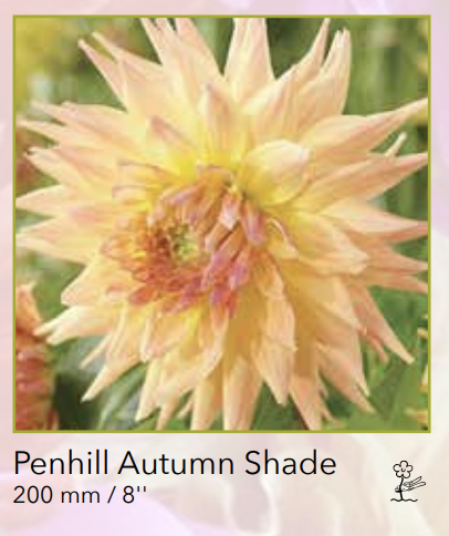 Penhill Autumn Shade.png