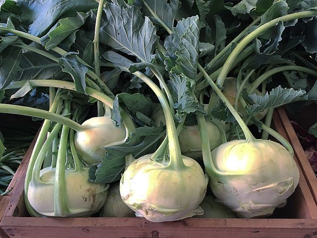 Kohlrabi                      Photo ©Evie Saffron Strands    JUNE    May was the month of Artichokes, Tropea Onions, Fennel, Fine Beans and Courgettes from Italy; Grelot Onions, Wet Garlic, radishes and Watercress from France; English Asparagus, recovering from everything the weather could throw at it, and early Strawberries with real flavour arriving from Kent.   We had wonderful English foraged Sea Vegetables too.  The second half of the month brought the first tender English Artichokes and, in the final week, the first picking of English peas, so sweet we just wanted to eat them straight from their pods.