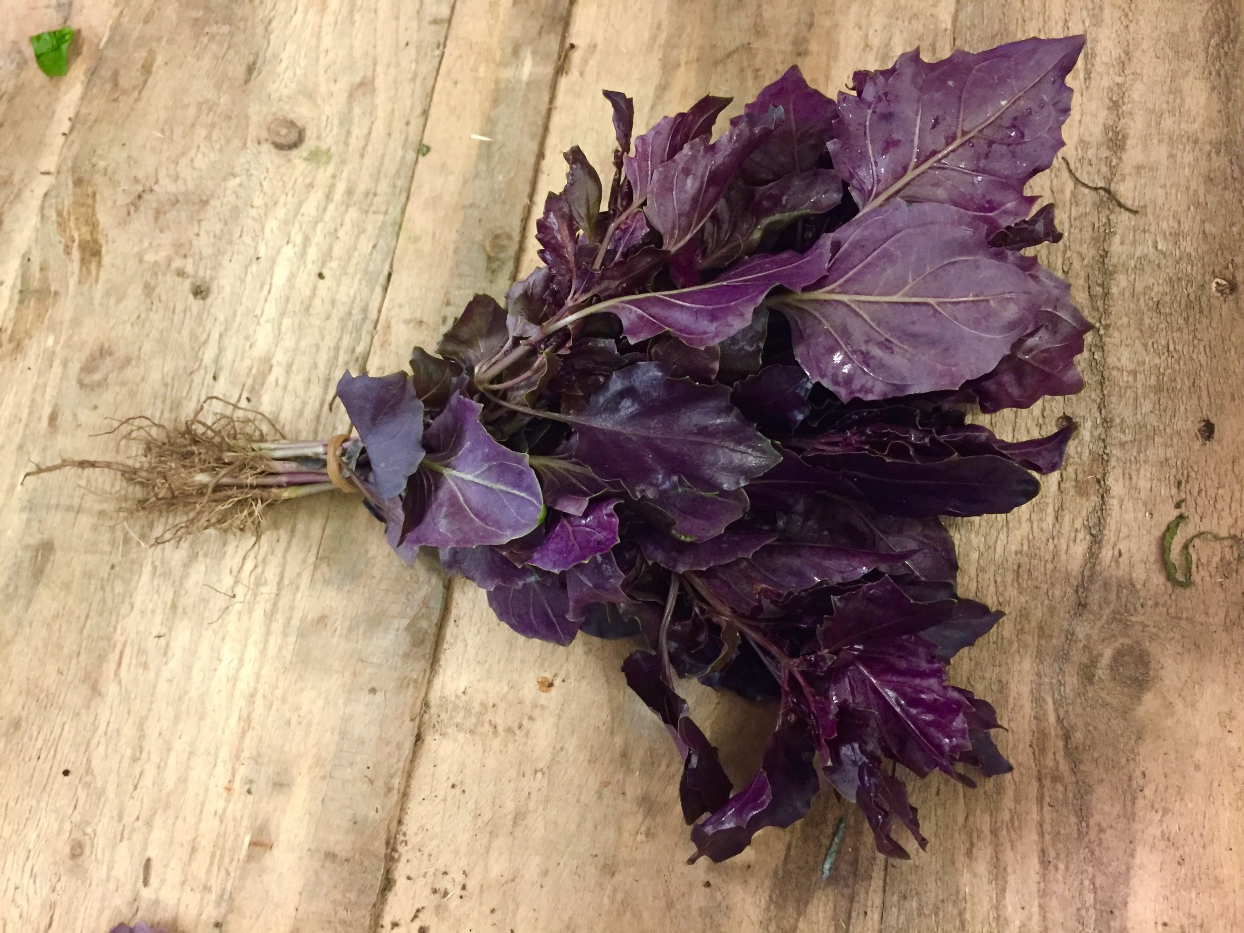 Purple Ligurian Basil            Photo ©Puntarelle&Co Ltd    In the first week of   JUNE , as I write, this is what stands out for us on the shelves of  Puntarelle & Co :  Several varieties of sun-ripened Italian  Tomatoes  along with flat, pink  Cipollini Onions  which roast so well, great quality new season  Garlic  for keeping.    Italian  Borlotti Beans ,  Fennel  and  Courgettes  –  Round,   Romano, Yellow  and  Green .  A number of forms of Italian  Cicoria  and  Aubergines  and both  Green  and  Purple Ligurian Basil .  We also have the first supply of  Tenerumi  (leaves of the Cucuzza Zucchini) from Italy for pasta and soups.  English new season produce is becoming more available.  We have  Asparagus  from our Kent grower coming in at better prices now we are well into the season.  We have English  Watercress  direct from the grower,  Artichokes ,  Peas ,  Broad Beans ,  Cucumbers ,  Radishes ,  Spring Onions  ,   Spinach  and juicy  Kohlrabi .    Small red/yellow  Watermelons  and the large Greek variety liked so much by our customers.    The special thin-skinned, orange-fleshed Melons from Italy now join the  Cantaloupe Melons .  We have new season  Sicilian Green Lemons , prized in particular for their highly fragrant zest.  We also have the first large, plump  Green Figs  from Italy.  There are various vibrant  Fresh Herbs  along with English  Strawberries, Raspberries  and the first of the  Gooseberries.   Italian  Peaches ,  Nectarines  and  Apricots  are already plentiful and French  Cherries  are starting to arrive.