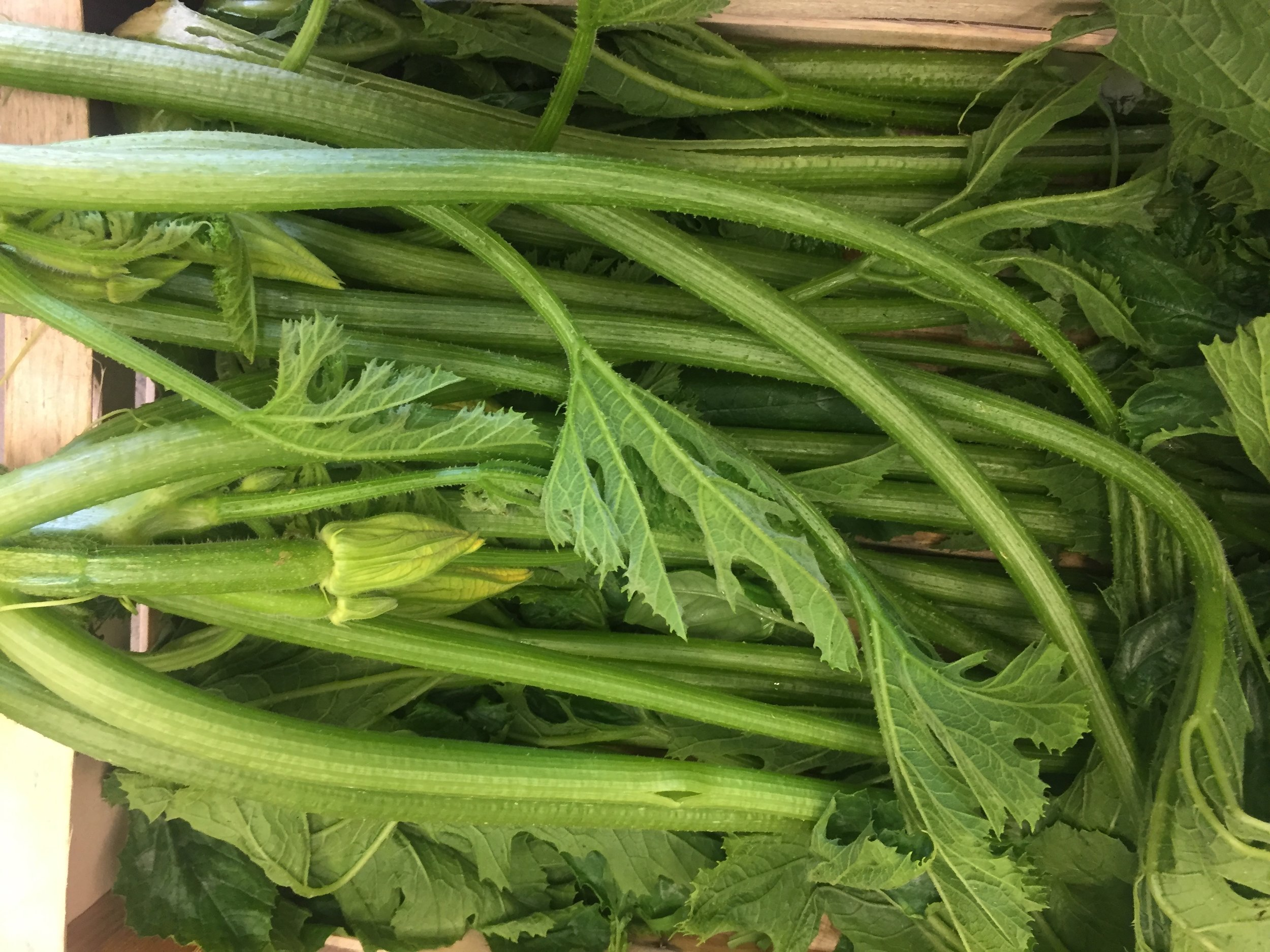 Tenerumi / Leaves of the Cucuzza Zucchini     Photo ©Puntarelle&Co Ltd   So, what new season produce can we  expect  to come through our doors through  JUNE ?  English  Broad Beans  and  Peas  and, perhaps, the first English  Fennel bulbs .  The  Asparagus  from our Kent grower will take us up to the last week of June with lower prices than in May.   Watercress  sourced direct from Kingfisher Farm in Surrey, who have been growing watercress for more than 150 years, should be with us throughout the month.    New Potatoes  from Jersey, France and Cornwall.  British  Strawberries ,  Raspberries    and  Gooseberries  will be benefiting from some summer sun in June.  English-grown  Herbs  –  Mint, Coriander, Parsley and Dill  in particular as well as  Cucumbers ,  Radishes ,  Spring Onions  and  Spinach .  Crunchy French  Grelot Onions  will continue through the month and we will have a good supply of  Round ,  Romana ,  Trompetta ,  White ,  Yellow  and  Green   Courgettes  and  Tenerumi  (leaves of the Cucuzza Zucchini) from Italy.  There will be  Borlotti Beans  and a greater variety of  Aubergines  this month.    Even sweeter varieties of sun-ripened Italian  Tomatoes .  The supply of flat, pink  Cipollini Onions  for roasting should continue as should quality new season  Garlic  and crunchy  Kohlrabi .    We should continue to have small red/yellow  Watermelons ,  Cantaloupe Melons  and new season  Sicilian Green Lemons , prized in particular for their highly fragrant zest.   Peaches ,  Flat Peaches ,  Nectarines, Apricots  and  Green Figs  from Italy.  We expect both Red and Rainier  Cherries  from France as well as  White  and  Blood  varieties of both  Peaches  and  Nectarines   (pêche de vigne & nectavigne) .     Plums  from France and Italy should be arriving and Green Almonds are now in season.    By late June we should have  English Cherries  arriving.