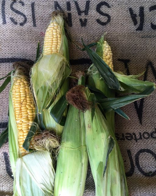 English Corn on the Cob       Photo ©Evie Saffron Strands   This summer is racing by and many fruits and vegetables are starting early.  Very hot temperatures on the European Continent and unseasonably cool, wet weather in the UK is undoubtedly affecting crops.  So, what new season produce can we     hope for during August?     English Aubergines  should continue along with  Corn on the Cob ,  English Runner Beans ,  Green Beans  and  Bobbi Beans  along with varieties  Courgettes .    Watercress  direct from our Sussex grower and bunches of fresh  English Herbs .  We should see more varieties of  English Plum  including the dusky, bitter Damson Plum much prized by our jam-making customers.  English  '  Autumn' Raspberries  and  Blackberries  should be available throughout the month, and look out for  Kent Cobnuts  later in the month.  The  English Pear  season is now underway and  Apples , including  'Discovery'  traditionally the first apple to be harvested and  'George Cave'  are here with more varieties to look forward too soon. We may see some  English Apricots  this month, though the lack of sun and warmth is an issue. A small amount of  English Cherries  may still be around in August, the latest variety we have had being the very dark fleshed  'Sweetheart' .   Fragola Grapes  (Strawberry Grapes) from Italy should be joined by  Muscat Grapes  from France.    Watermelons  from Greece should continue.   From Italy,  Flat and Round Peaches  and  Nectarines  if the hot weather on the Continent hasn't been too destructive.  Tomatoes , including we hope the   Sorrento   grown in the rich volcanic soil surrounding Mount Vesuvius. We hope too that the highly fragrant roots-on  Ligurian Basil  will continue.  From France,   luscious  Black Figs  as well as the Blood varieties of stone fruits  Peche de Vigne  and  Nectavigne  , highly perfumed  Charentais Melons  and a couple more weeks of sweet, fragrant,  Mirabelles .  Reine Claude Plums  should continue a little longe