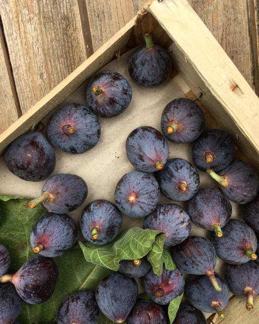 French Black Figs       Photo ©Evie Saffron Strands   The weather in London may have taken a strange Autumnal turn but salads are still on the menu. This recipe is a seasonal marriage of green beans and figs, both of which are at their best right now. You could use Runner Beans, French Green Beans, or the Bobbi Beans variety we have. If all you want is those beautiful figs, I can't think of anything better than to cut them in half and eat with a spoonful of ripe Gorgonzola.     Salad of Green Beans and Figs    (Serves 4)   300g Runner Beans or Green beans or Bobbi Beans  4 ripe figs  1 good handful of Rocket leaves  60g Parmesan, shaved with a vegetable peeler    Dressing:  1 tablespoon Moscatel vinegar  1 teaspoon runny honey  3 tablespoons extra virgin olive oil  Salt and pepper  Mix the Dressing ingredients.  Bring a pan of water to the boil and salt it. Top and tail (and slice if using Runners) the beans. Add to the water, bring back to the boil and cook for 2-3 minutes until the beans still have a little bite. Drain, plunge into cold water (to retain the colour) then dry on kitchen paper.   When ready to serve, re-emulsify the dressing, toss the beans in it then divide them between four plates. Briefly place the rocket leaves in the dressing left in the bowl then add to the plates. Quarter the figs and arrange on the plates. Add the shaved parmesan and pour over any remaining dressing.