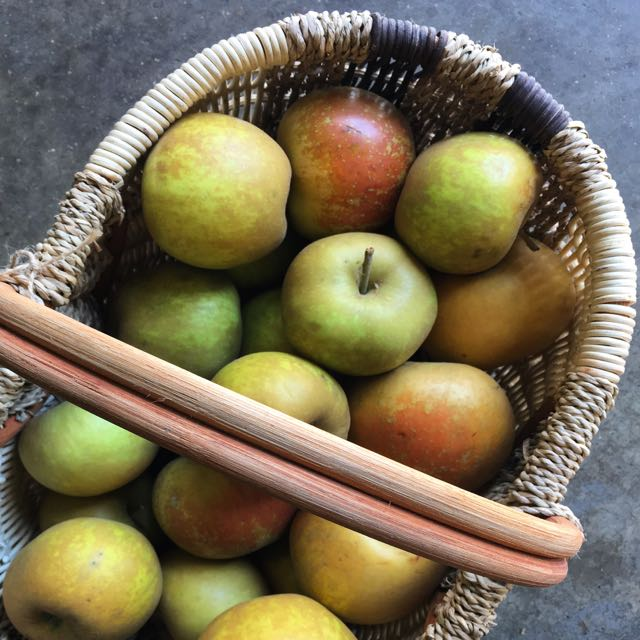 St Edmund's Pippin Apple    Photo ©Evie Saffron Strands    Apples   The English  Apple  harvest is now fully underway with ever more varieties joining the   Discovery  , which came to our shelves in mid-August.  It's now that the stone fruits of late summer, ending with dusky Damson plums, give way to northern hemisphere Apples and Pears.    Apples grow well in a temperate climate and English apples are hard to beat.  There are over 2,000 varieties – dessert, cooker and in-betweener.  Sadly, only a tiny number of these are commercially grown.  Flavours and textures vary greatly depending on the variety of apple.  Deep red apples are beautiful to look at and tasty if eaten freshly picked, but it's the green/brownish-skinned 'Russet' family and those streaked green/red that improve with keeping.    For the 4th year running we are buying our seasonal apples and pears from  Foxendown Fruit Farm  in Kent.  We start collecting their harvest of 'Discovery' apples in August and finish in late January.  John, the owner of this small family run farm, guides us and helps us choose from his 20 varieties of dessert apple and 3 cooking apples (along with his shorter season pear crop of Triumph of Vienna, Conference and Comice – in now and through October).  This week we have Dessert Apples:    Laxton Fortune  , a Cox/Wealthy apple cross which is juicy, crisp, aromatic and a little sweeter than a Cox's Orange Pippin, with us through September    Worcester Permain   another early-mid season apple; can have a light strawberry flavour and is picked to the end of September.    St Edmund's Pippin  , a richly-flavoured Russet apple picked to the end of October    Early Windsor  , a cross between a Cox and a Dr Oldenburg: similar to, and a little earlier than, the Cox's Orange Pippin and should arrive up to mid-November.  More apples will follow, including those Cooking Apples that need a little longer on the tree.  For the kitchen, it's hard to beat a Bramley for a classic apple pie or crumble but where less acidic, firm-fleshed apples are needed, reach for varieties like Laxton Fortune, Cox or Russet varieties or the later Braeburn.  All have a good balance of sour and sweet.  Good spices for apples are anise, cinnamon, nutmeg and vanilla.  Clove too if used sparingly.  A few apples added to a pan of roasting pork together with a few sage leaves is a wonderful thing.  A simple apple puree cooked with dried fruits and cinnamon is a fixture in my kitchen during autumn and winter – so good with yogurt and a spoonful of honey.  A whole baked Bramley, cored, stuffed with dried fruits and a little sugar, is the simplest of desserts.  Just add cream.  Everyone should have a good apple cake recipe.  Replace some of the flour with ground hazelnuts and you won't be disappointed.  And then, of course, there's Tarte Tatin!