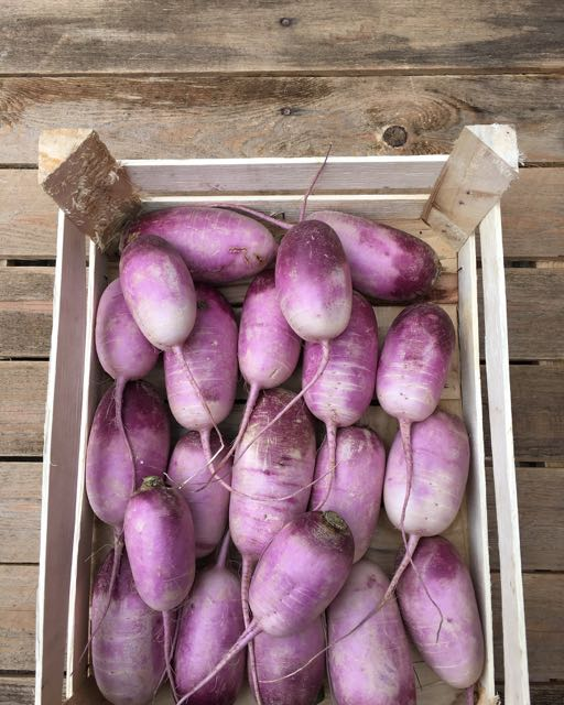 Violet Radish    Photo ©Evie Saffron Strands   Right now, produce coming through our doors is bathed in autumn oranges, browns, yellows and greens with splashes of purple. Root vegetables are becoming more abundant.  As I write on the 6  th   October I see:   British grown  Turnips,   Swede ,  Beetroot ,  Heritage Carrots ,  Parsley Root, Celery , and  Parsnips.  We also have French  Jerusalem Artichokes .  From France too, we have  Long Black Radish ,  Watermelon Radish  and the spectacular  Violette Radish . There is French  Salsify .  Greens include UK grown  Romanesco ,  Cauliflower , heads of  Broccoli  as well as  Purple Sprouting Broccoli  and  Black Cabbage  (Cavolo Nero),  Kale  and  Rainbow Chard .  Brussel Sprouts  and  Brussel Tops  are here already.   From Italy, the cold weather bitter greens are arriving,  Puntarelle  (Catalogna),  Chicoria  (Catalogna Naturala), and  Cime di Rapa  (Rapini)  There's an increasing variety of UK grown  Autumn Squash  coming in now, including  Red Kuri (Onion Squash)  and we have  Spaghetti Squash  from France. We also have  Delica Pumpkins  and  Ironbark Pumpkins  from Italy.   Watercresss  from our Sussex Farmer continues to arrive and we have English  Wet Walnuts .   Potato  varieties are increasing. This week we have two waxy-fleshed favourites: English  Pink Fir Apple  and  La Ratte  from France. We also have  Rose Lautrec Garlic  and new season  Smoked Garlic  from France.  English  Leeks  and crunchy  Kohlrabi  are in.  The mild start to autumn means we still have Italian  Borlotti Beans  and English  Runner Beans . English  Aubergines  too.  From Scotland we have  Chanterelle Mushrooms  and  Girolle Mushrooms  and this week there are  Porcini/Ceps  from both Italy and France.   There are beautiful  Muscat Grapes  and  Chasselas Grapes  from France along with a particularly sweet seedless white/blush grape from Italy.  From our Kent farmer this week come  Cox Apples,   Red Windsor Apples  and  Comice Pears .  We h