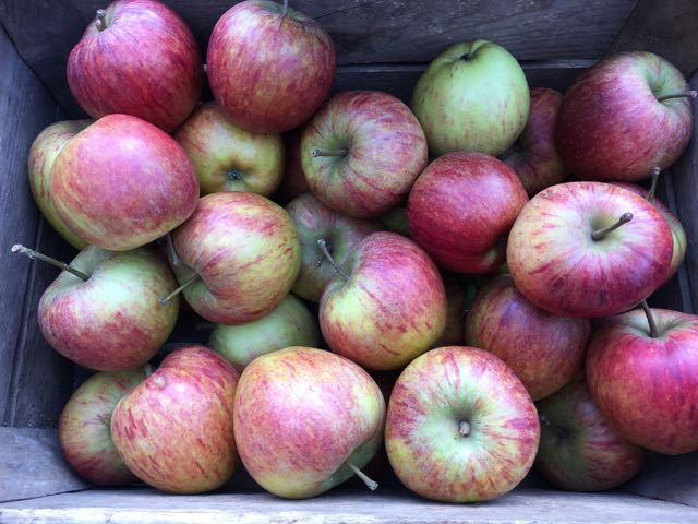 English Cox Apples    Photo ©Evie Saffron Strands   It's hard to beat a Bramley for a classic apple pie or crumble but where less acidic, firm-fleshed apples are needed, reach for varieties like Laxton Fortune, Cox, Russet, the Blenheim or Braeburn. All have a good balance of sour and sweet. Spices such as anise, cinnamon, nutmeg and vanilla pair well with apples. We like to keep these monthly recipes seasonal and easy and this one definitely ticks both boxes. It comes from Jane Grigson's invaluable 'Fruit Book' and the results are delicious.  If you first clarify the butter, its catch-point is higher so you don't have to watch the cooking constantly, but it's not essential to do this. You could also use pears in this recipe if you prefer.   Buttered Apples (Serves 1)  30g butter (clarified or unclarified)  1 Apple  2 generous tablespoons caster sugar  A little cinnamon (optional)  A little water, cider or apple juice  A little cream (single, double or whipping)  A small knob of butter  Peel, core and cut the apple into eight wedges. Sprinkle with lemon juice to stop oxidisation if you aren't ready to cook them immediately.  Heat the butter in a frying pan, dry the apples slices and cook them gently in a single layer. When the underside turns golden brown, turn the slices over and sprinkle with the caster sugar. Cook until caramelised then add the sprinkling of cinnamon, if using. Lift the slices onto a serving dish.  Deglaze the pan with a little water, cider or apple juice (you can also add a little Calvados now, if you like). Keep stirring and add a little cream to make a sauce. Add the small knob of butter then pour the sauce over the apples and serve.