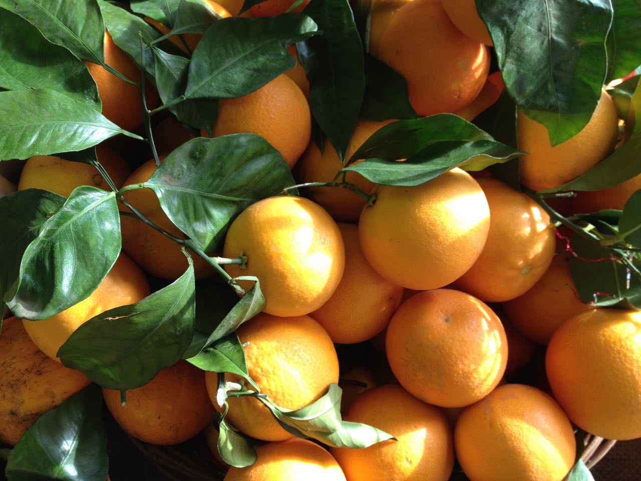 Sicilian Early Season Tarocco Oranges    Photo ©Evie Saffron Strands    GOOD TO KNOW:   As we race towards Christmas, a word about opening hours.  Our Arch at Spa Terminus will be open: 21, 22 and 23 December 08.00-at least 13.00   Please get in touch if you would like to pre-order for collection on any of these days. We can be contacted by email on:  hello@puntarelle.co.uk   Throughout December we will be selling our seasonal Water Kefirs as usual. Going into winter, you can expect flavours that match this festive time with spices, citrus and dried fruit notes to the fore. Examples are:   Pumpkin & Orange Spice Water Kefir   With notes of orange, and gingerbread, we think this seasonal Kefir catches the mood of the time of year perfectly.    Beetroot & Ginger Water Kefir   We had the idea to harness the natural sugars, earthy flavours and dramatic pigment in beetroot for this spicy Kefir and the results, we think, are very pleasing.  Like all our Water Kefirs, these unpasteurised fermented drinks bring beneficial micro-organisms, B vitamins, minerals and enzymes in a slightly sour, zingy, low sugar form. More about our range of Fermented products at:  www.londonfermentary.com