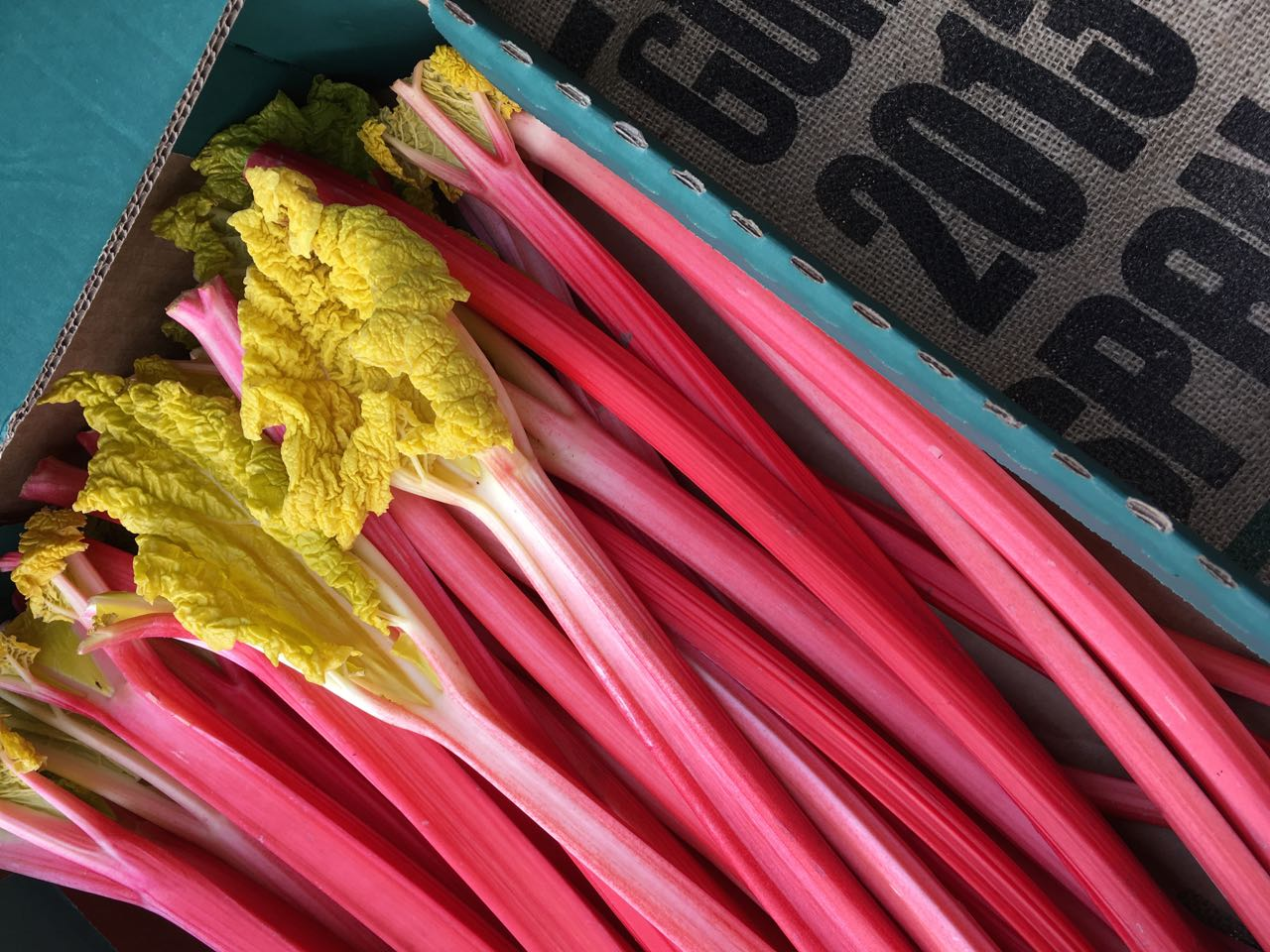 Yorkshire Forced Rhubarb    Photo ©Evie Saffron Strands   As we enter what is normally the coldest month of the year, there is a surprising amount to look forward to in the fruit and vegetable world to cut through the cold and grey. Vibrant pink Yorkshire Forced Rhubarb, new season citrus; bitter-sweet yellow/green, pink and red Chicories; and the greens and purples of the brassicas are just the start.  As I write we have:     Tender pink stems of  Yorkshire Forced Rhubarb .   Seville Oranges  for making bitter marmalade and buttery curd.   Blood Oranges  for juicing or salads.  Deep red sweet-sharp  Pomegranates .  Crunchy, salty  Camone and Marinda Winter Tomatoes .  Bunches of the Mediterranean succulent Barba di Frate/Agretti/Monk's Beard.  Bitter-sweet Italian  Chicoria  including  Puntarelle  (Catalogna) and  Cime di Rapa .  Several varieties of colourful bitter-sweet  Radicchio  and, milder,  Endive .  British  Brassicas  including  Savoy Cabbage , spectacular green and purple hued  January King , blistered  Black Cabbage  (Cavolo Nero), green and purple vitamin and mineral rich  Kale ,  Brussels Sprouts  and  Brussels Tops  which have benefited from a kiss of frost.  Beautiful English  Purple Sprouting Broccoli ,  Cauliflower  and swirling lime-green  Romanesco , with the creaminess of cauliflower and the taste of broccoli.   Root vegetables including  Celeriac ,  Jerusalem Artichokes ,  Swede ,  Beetroot  and   organic  Heritage Carrots  are all British grown this week, as are the  Leeks .  A variety of  Winter Squash  and  Pumpkins .   Potato  varieties this week are  Cyprus  and  Desiree ,  Maris Piper , and waxy-fleshed  Pink Fir Apple  and  La Ratte .  Fresh organic  Ginger Root  and  Turmeric Root .  A freshly-stocked  londonfermentary.com  fridge.