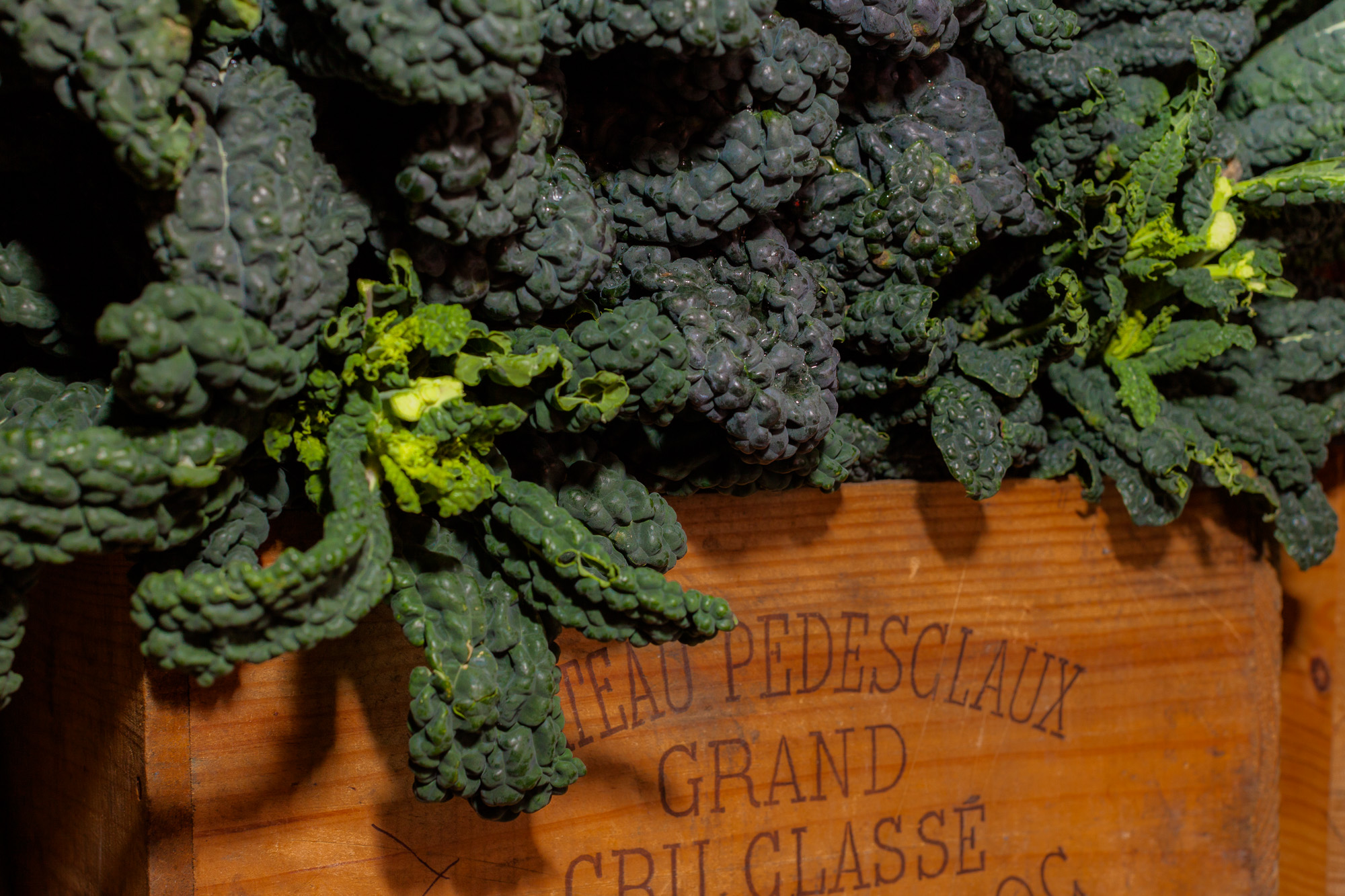 Cavolo Nero/Black Cabbage     Photo ©Puntarelle&Co Ltd    GOOD TO KNOW:    *** Puntarelle & Co will be back from holidays and trading normally from 12/13 January 2018 ***