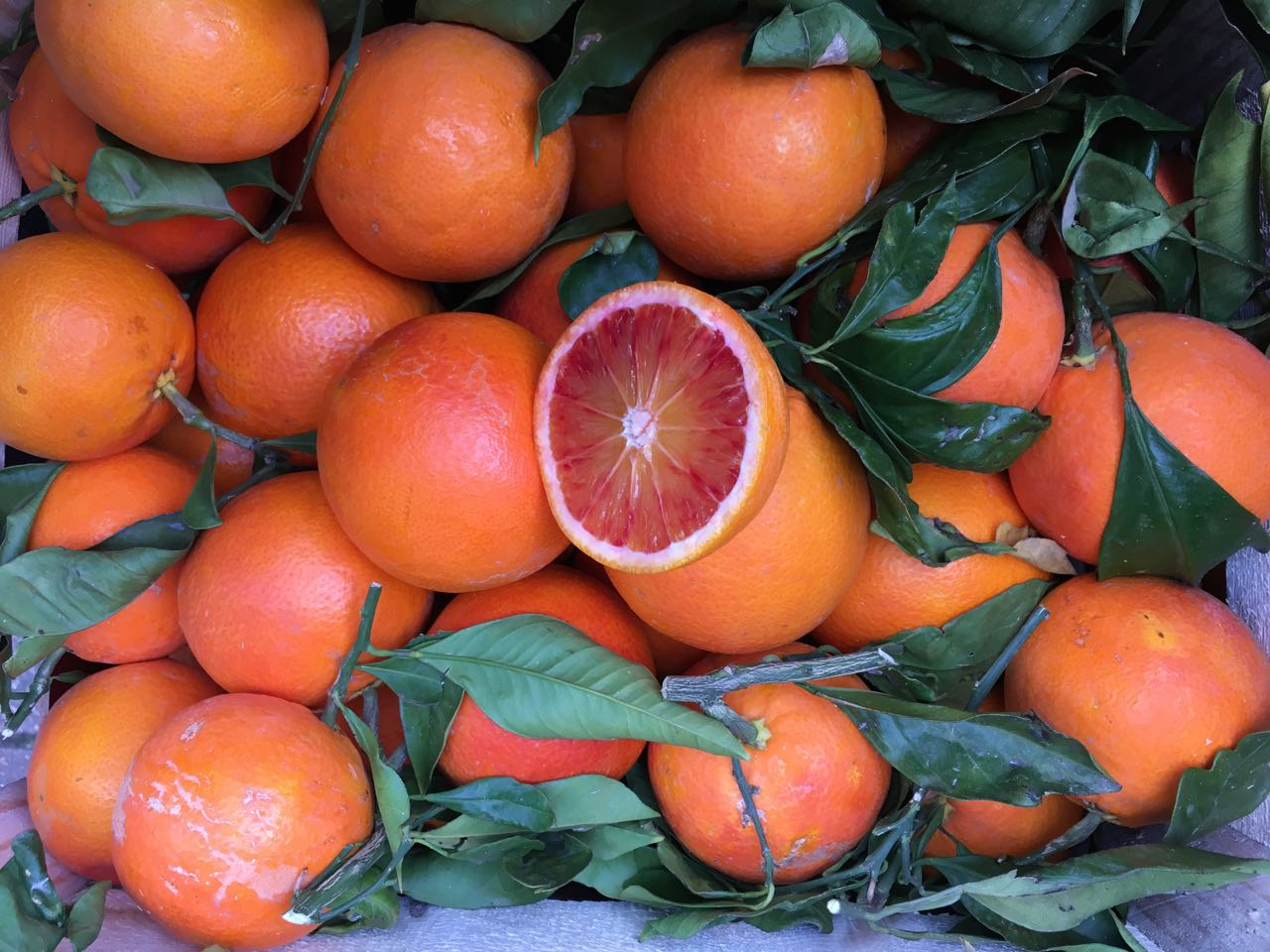 Sicilian Tarocco Oranges    Photo ©Evie Saffron Strands      Sicilian Citrus     As soon as the Sicilian Citrus season starts in December we are in contact with our growers to find out what is being harvested and when we can get them for our customers. The fruit is grown organically or with minimum intervention. There are easier ways to put citrus on our shelves but nothing compares with the taste and quality of the citrus we receive direct from Sicily.    In the citrus 'gardens' of Sicily, a sharp drop in temperature for a short period overnight results in the oranges taking on the distinctive red pigmentation. This gives a boost to Vitamin C and the Antithynins which make Sicilian Blood Oranges so special. The darker the flesh, the higher these levels are. Citrus harvesting starts at the end of November and can, in a year of normal weather, go on through the varieties until June. It's the oranges that grow best in Sicily and they get the most attention, thanks to their uplifting colour palette and versatility. Citrus varieties crossbreed readily, which is why new varieties of citrus come to market from time to time. From Sicily the important varieties of orange are Moro, Tarocco, Sanguinello and the sweet Navelina. Of the bloods, the Moro develops the reddest flesh and its juice is almost raspberry-flavoured. The Tarocco is a little sweeter and its skin and flesh more variably-coloured. Our arch is aglow when the Tarocco Fire variety arrives thanks to its fiery orange/red streaked skin. The Sanguinello appears later in the season. Its thin peel make it a more delicate traveller so we tend not to get this variety. The sweet Navelina is less special but still good. And we're always happy to receive Pink Grapefruits from our growers as it's so difficult to find unwaxed grapefruits. As weather conditions change, lemons are now growing more happily on the island and, if we can get them, we take them. Tiny Kumquats and huge Cedro will be arriving too.    While much citr