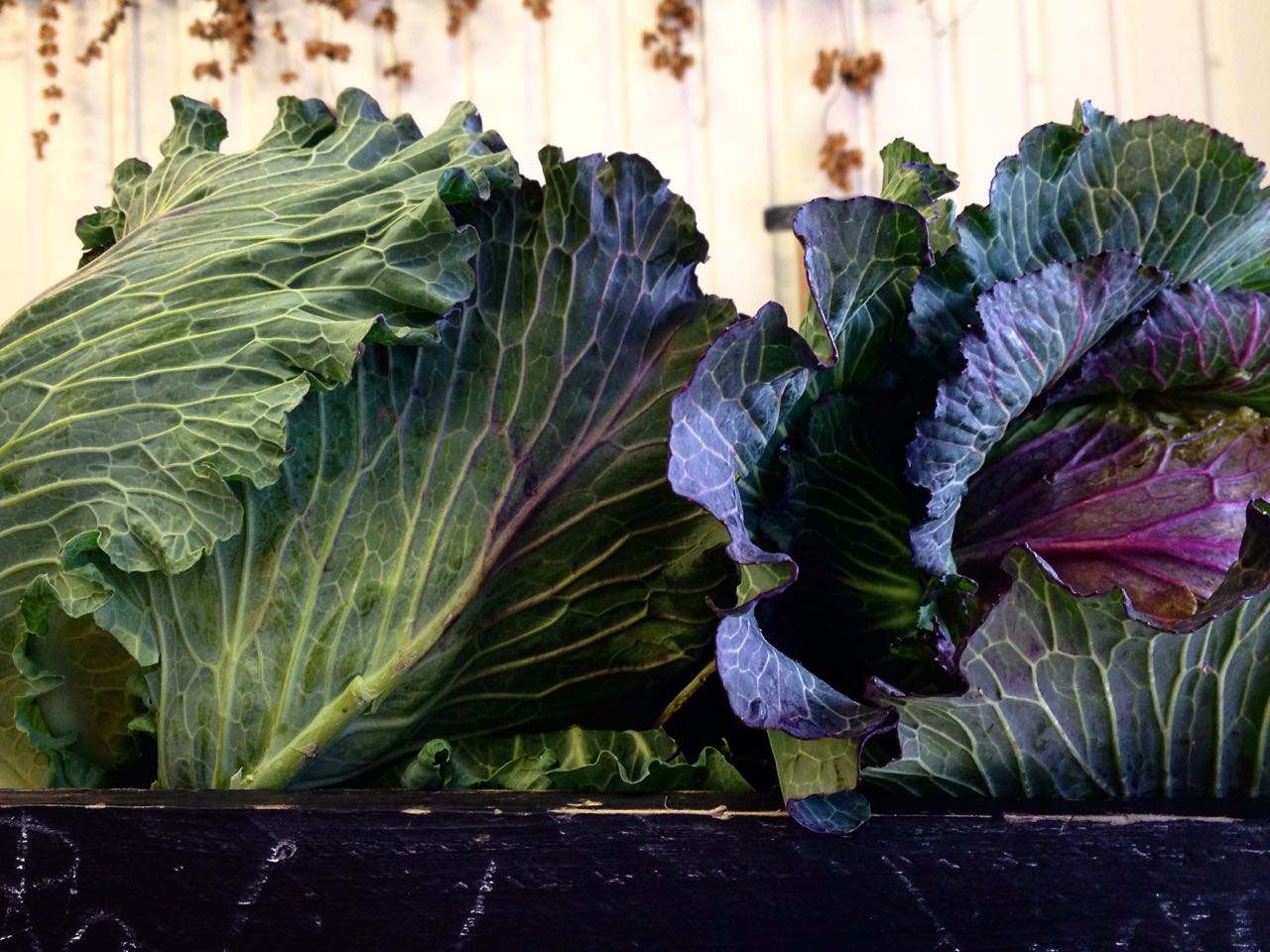 January King Cabbages    Photo ©Evie Saffron Strands       FEBRUARY      January was a month when no two days seemed alike with oddly fluctuating temperatures but British-grown Brassicas and roots seemed to cope well.  In our January Report, we promised you Sicilian Citrus and it was worth waiting for.  Tarocco blood oranges, Nova Mandarins and Pink Grapefruits came on our direct-sourced pallets, and there is more citrus to look forward to this month.  Vibrant pink spears of Forced Yorkshire Rhubarb brought more colour and acidity to our shelves and the first fronds of crunchy, salty Agretti arrived too.