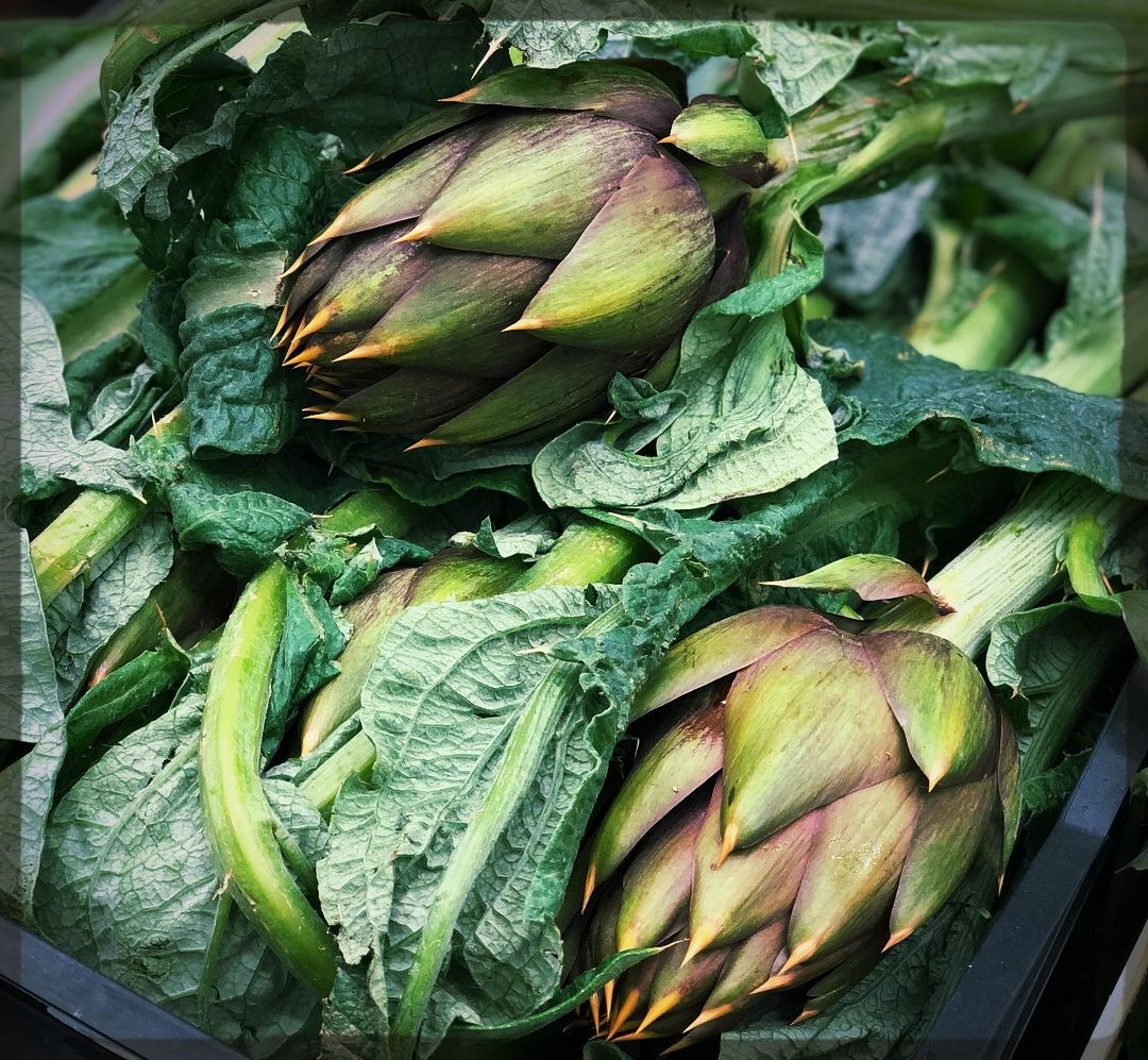 Spikey Sardinian Artichokes    Photo ©Puntarelle&Co       Writing in the first few days of February, here is the  produce we     expect to have for you before this last full month of winter comes to a close:        Vibrant pink-stemmed  Yorkshire Forced Rhubarb  will continue throughout the month.   Un-treated, un-waxed  Tarocco Blood Oranges ,  Nova Mandarins , common  Mandarins  and  Pink Grapefruits  will be joined by  Lemons ,  Cedro  and  Kumquats .  Deep red sweet-sharp  Pomegranates .  English  Purple Sprouting Broccoli , which is particularly good in February, and creamy  Cauliflowers .  Hispi Cabbage  from southern Europe.  Crunchy, salty Italian  Camone and Marinda Winter Tomatoes .  From Italy too, bunches of the Mediterranean succulent  Barba di Frate/Agretti/Monk's Beard ,  Purple Cauliflowers ,  Rainbow Chard ,  Bulb Fennel ,  Roman Artichokes  and spikey  Sardinian Artichokes .  Bitter-sweet Italian Greens like  Puntarelle  and  Cime di Rapa  and new season  Courgettes .  A variety of colourful, bitter-sweet pink and red  Radicchio  and milder-leaved yellow/green  Endive .  Vitamin and mineral-rich British  Brassicas  including  Savoy Cabbage , green and purple hued  January King , blistered-leaved  Black Cabbage/Cavolo Nero ,  Kale ,  Brussels Sprouts  and  Brussels Tops .  Orange-skinned  Onion Squash .  Root vegetables including  Celeriac ,  Jerusalem Artichokes ,  Swede ,  Beetroot  and   organic  Heritage Carrots  are all British grown this week.  English  Leeks  and Spanish  Calçot onions .   Potato  varieties this week are  Cyprus  and  Desiree ,  Maris Piper , and waxy-fleshed  La Ratte .  Fresh organic  Ginger Root  and  Turmeric Root .  A freshly-stocked   londonfermentary.com   fridge.