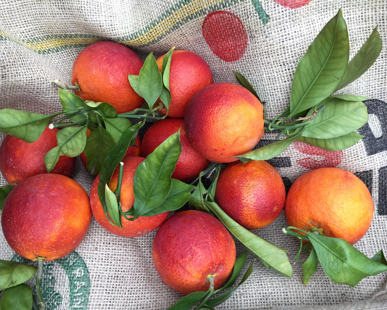 Sicilian Tarocco Fire Oranges    Photo ©Evie Saffron Strands      MARCH     Through February, British-grown hardy brassicas and winter stores of root crops have been essentials in our kitchens. The pink and red stems of Yorkshire Forced Rhubarb, vibrant Radicchio leaves and fragrant Sicilian Citrus brought colour to our lives in what has turned out to be a truly wintery scene. As I write, heavy snow is falling. Here in London, sturdy boots and warm scarves and hats are essential. Even southern Europe hasn't been spared this winter.    In March, to add to our greens and roots, we are at our most reliant on southern Europe whose milder temperatures give their farmers a head-start over our own growers. We turn to South Africa and South America for a few items. This month we would normally expect the first of our supplies of deliciously sweet peas, tender broad beans, pungent wild garlic leaves and juicy wet garlic to propel us into spring. The latest blast of cold, when even Rome has been blanketed in snow, comes just as they are raising early spring crops in southern Europe. Spare a thought for growers here in Britain and throughout the rest of Europe right now.