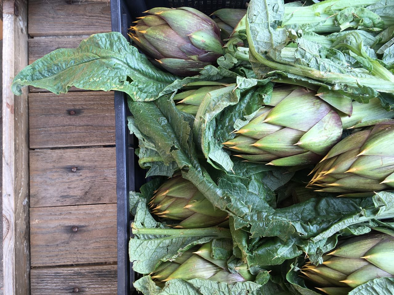 Sardinian Spiky Artichokes    Photo ©Evie Saffron Strands       We are very proud of our  Citrus,  much of it untreated and directly sourced from Sicily. Crates of  Leafy Lemons , juicy  Navel Oranges ,  Tarocco   Oranges ,  Pink Grapefruits  and highly-perfumed  Mandarins  have been delivered in increasing variety since late December. Last week  Kumquats  arrived and we hope for more red-fleshed  Moro   Oranges .      At the beginning of March here at Puntarelle & Co we have:     British  Brassicas  including  Savoy Cabbage , green and purple hued  January King , blistered-leaved  Black Cabbage/Cavolo Nero ,  Kale ,  Brussels Sprouts  and  Brussels Tops , and  Purple Sprouting Broccoli . We have  Kohlrabi  too.  For Roots, which store well, there are  Jerusalem Artichokes ,  Beetroot ,  Turnips ,  Swede,   Celeriac ,  Potatoes  and  Carrots .  Leeks , which are happy in cold ground, are still coming in from the fields.   Yorkshire Forced Rhubarb  is reaching its peak. Its stalks are a little thicker and more deeply coloured now, and are tasting at their best.   Untreated Sicilian Citrus  in the form of  Leafy     Lemons , juicy  Tarocco   Oranges ,  Pink Grapefruits , sweet  Mandarins Nova  and common Mandarins.   We have a small number of highly-coloured  Tarocco Fire Oranges  this week. And, via the Milan market, we have  Bergamots  and  Cedro .  There may be snow on the ground but this week sees the first  Broad Beans ,  Fresh Peas ,  Wild Asparagus , cultivated  Purple Asparagus  from warmer climes. We have  Minestra Cabbage  and  Broccolo di Bassano  from Italy.  There is vitamin and mineral packed Italian  Spinach  and  Chard  and colourful bitter-leaved heads of  Radicchio . There's  Puntarelle Chicory  and  Cime di Rapa  too.  Crunchy, juicy  Agretti/Monk's Beard  continues, an excellent accompaniment to fish or simply blanched and tossed in anchovy butter.   Spiky Sardinian Artichokes  and globes of  Romaneschi Artichokes  are still with us and, this week,