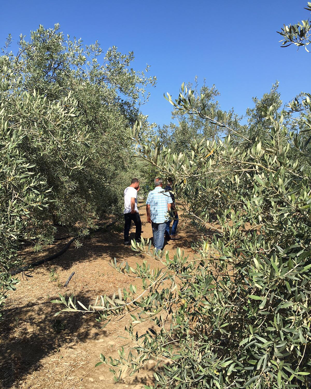 Visiting Sicilian Growers