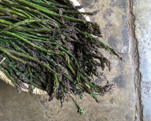Wild Asparagus    Photo ©Evie Saffron Strands